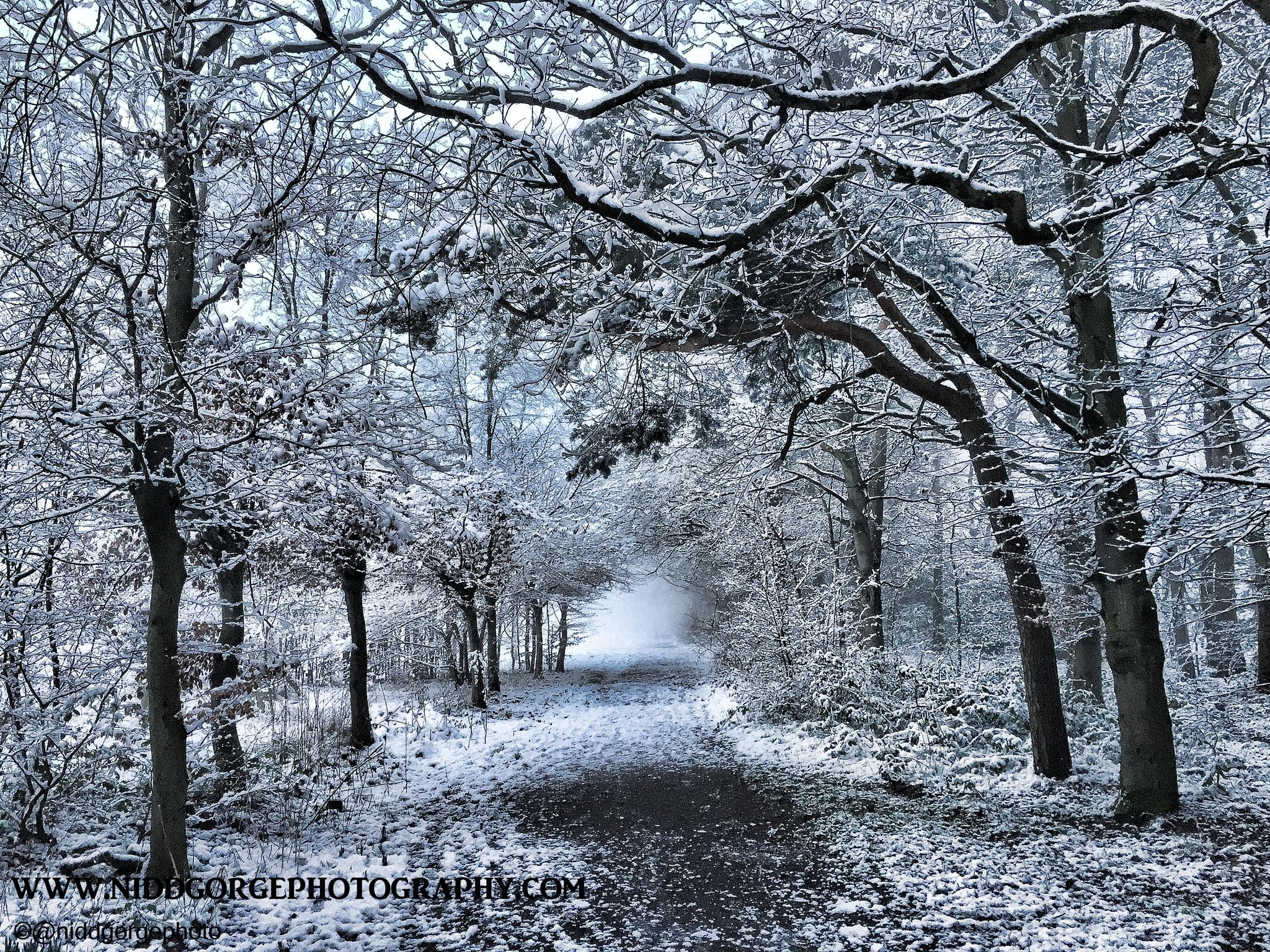Walking in a winter wonderland. by Niddgorgephoto