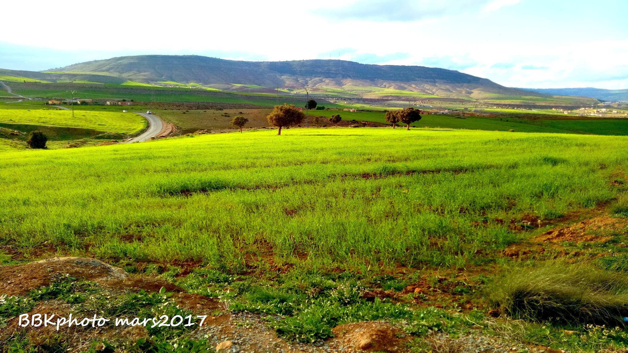 nature a saida dz by Boubakar Hammadi