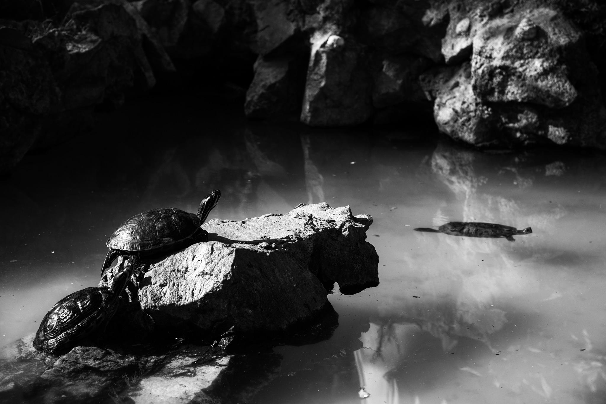 Untitled by Tonia Karaleka _ BBphotography