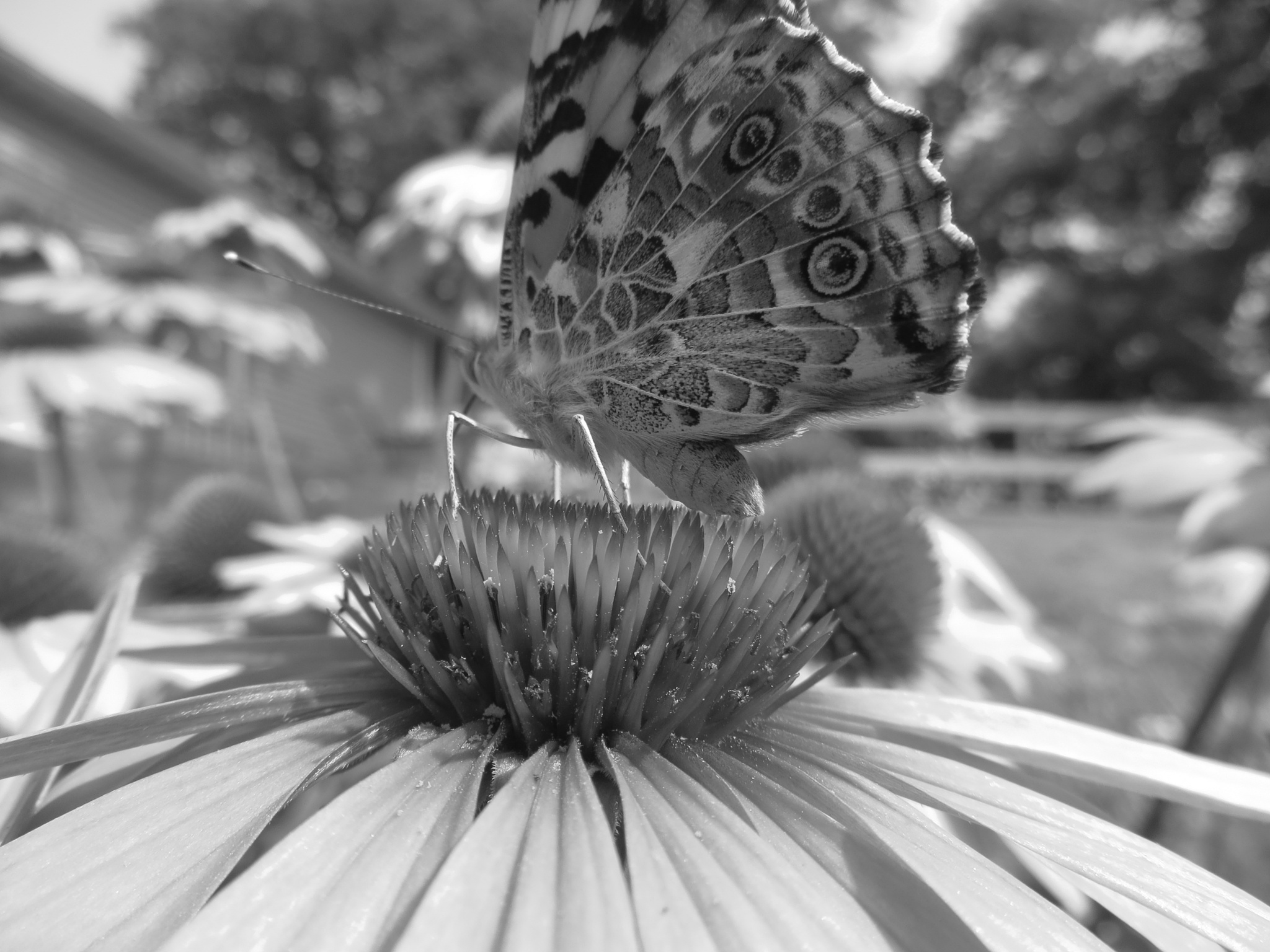 Beautiful Butterfly by Emily Rose Teubert