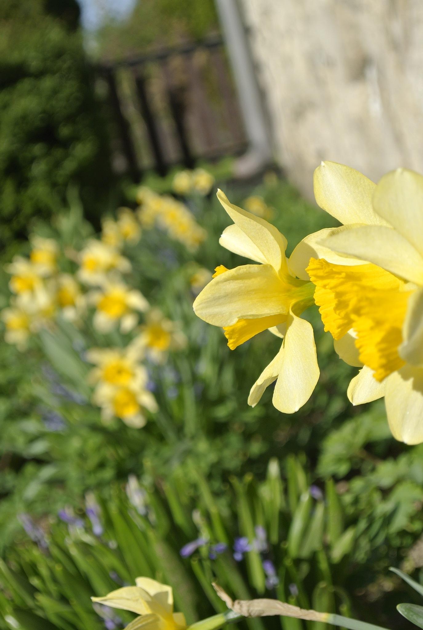 Garden by Lilla