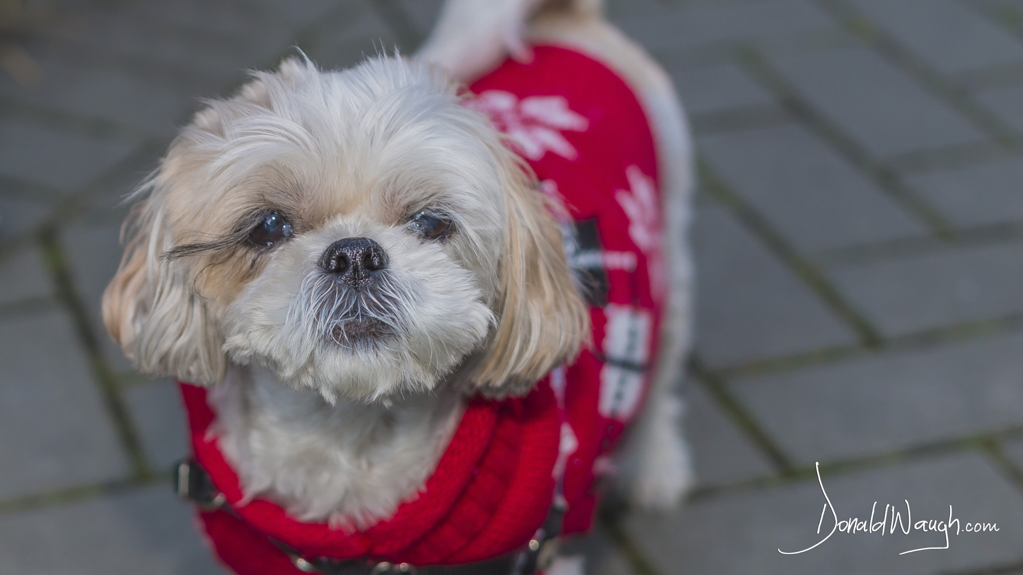 Cute Little Doggie by Donald Waugh