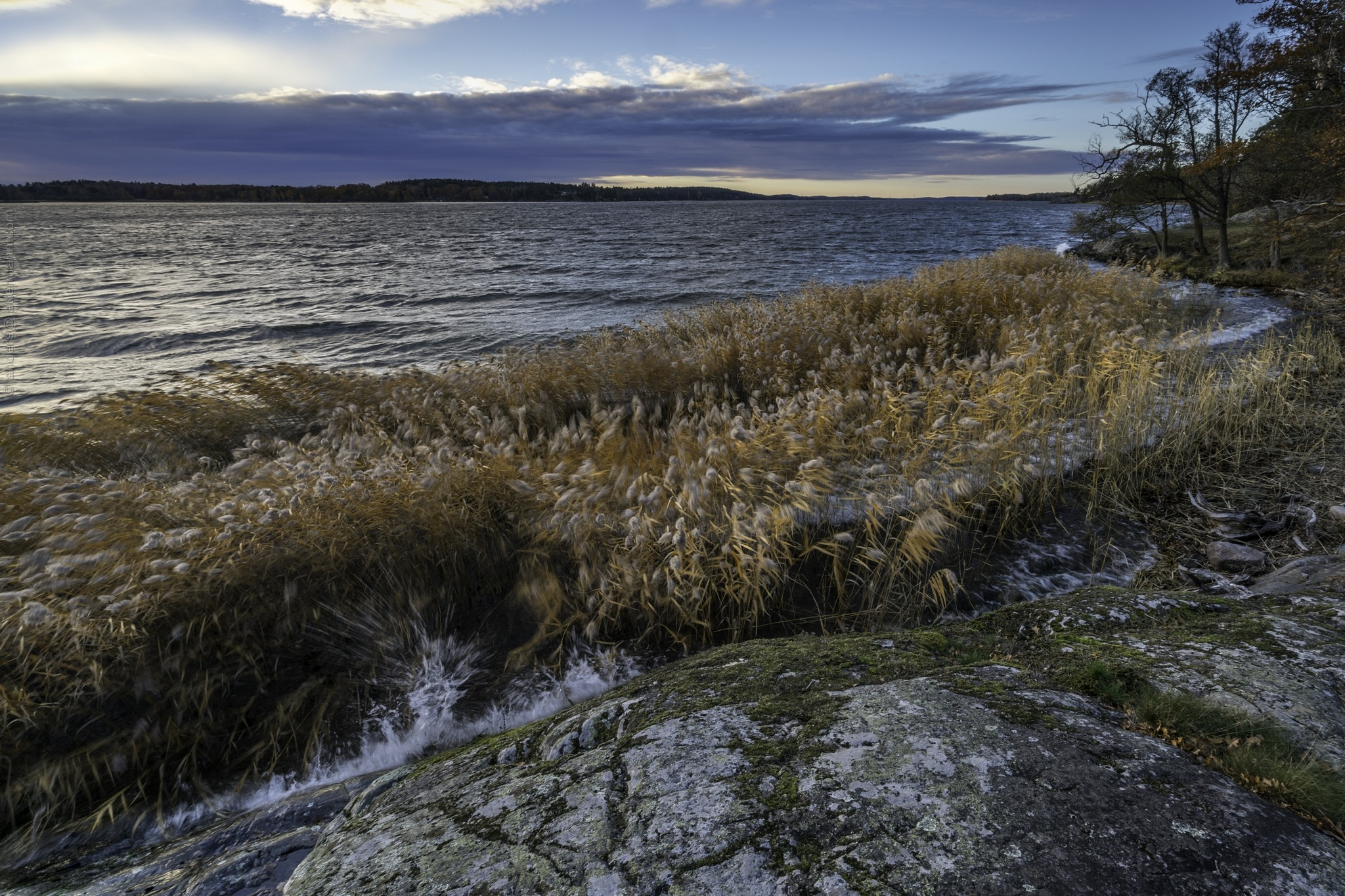 Hard wind by lattesweden - One picture per day. One year in the nature. 2015-11-15 to 2016-11-16