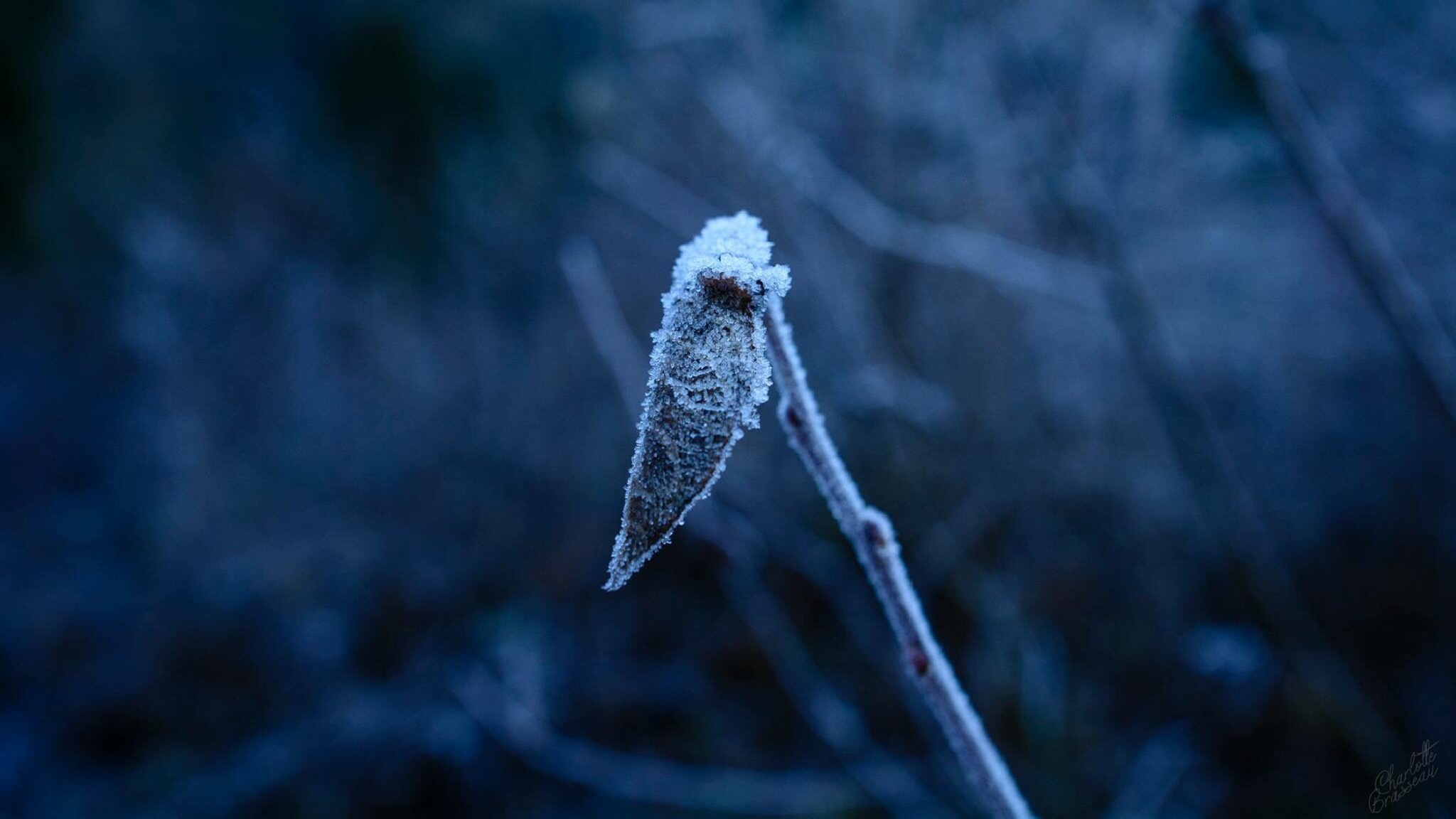 Frosted  by Charlotte Brasseau