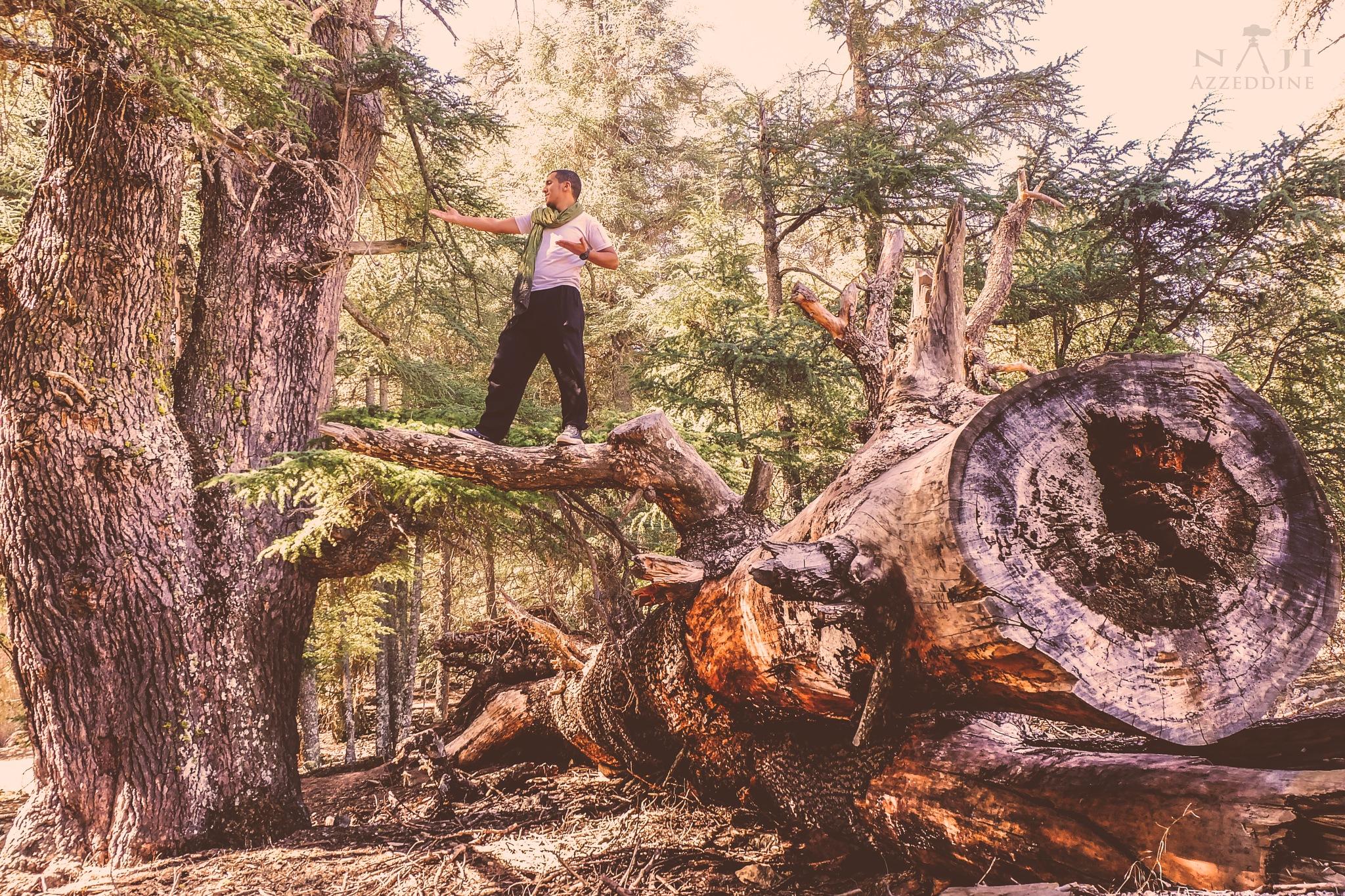 In the forest by Azzeddine Naji
