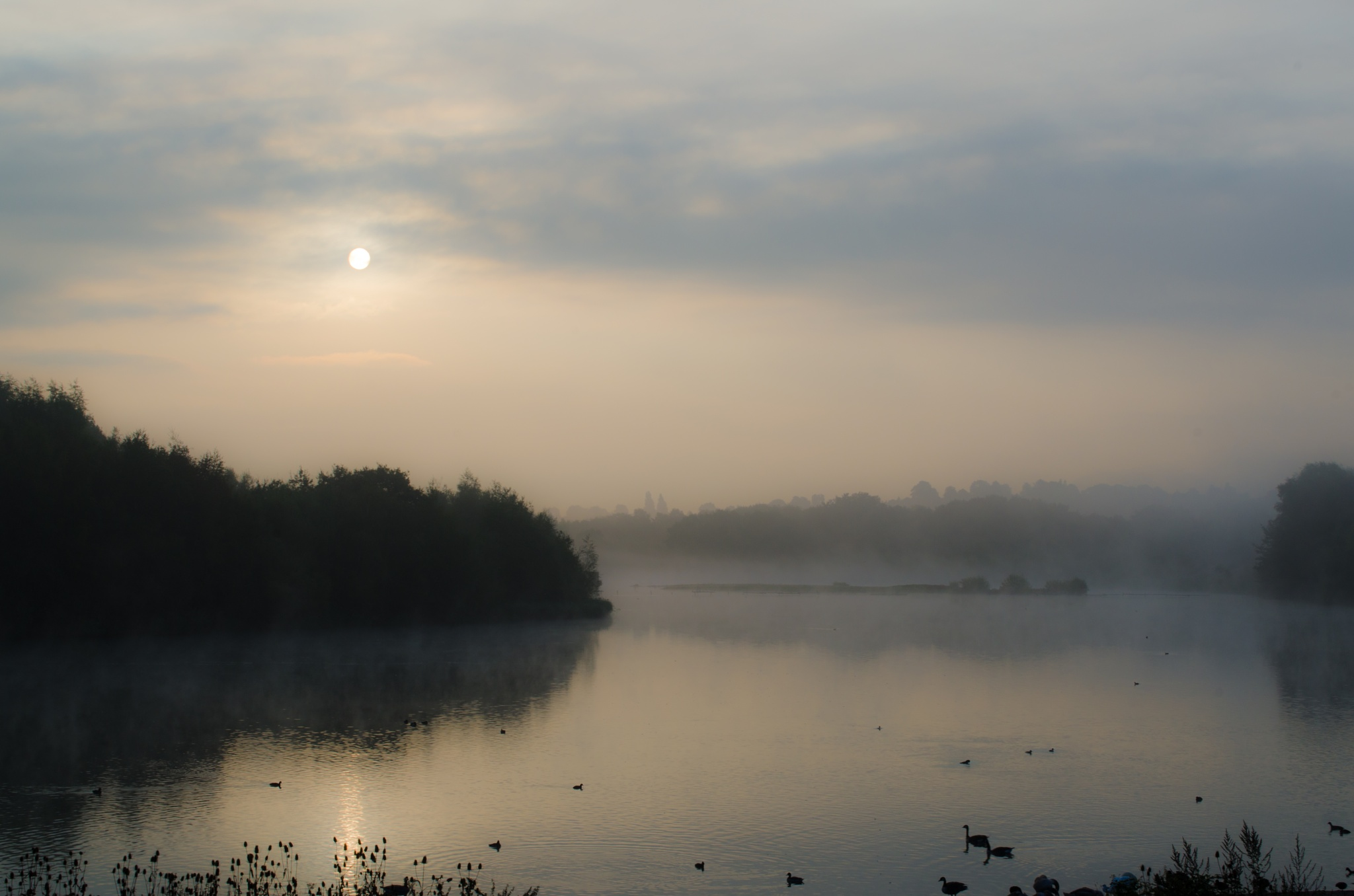 Early morning mist by Simon Lea