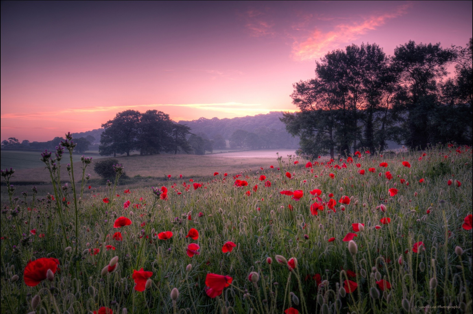 Poppy meadow dawn by Simon Lea