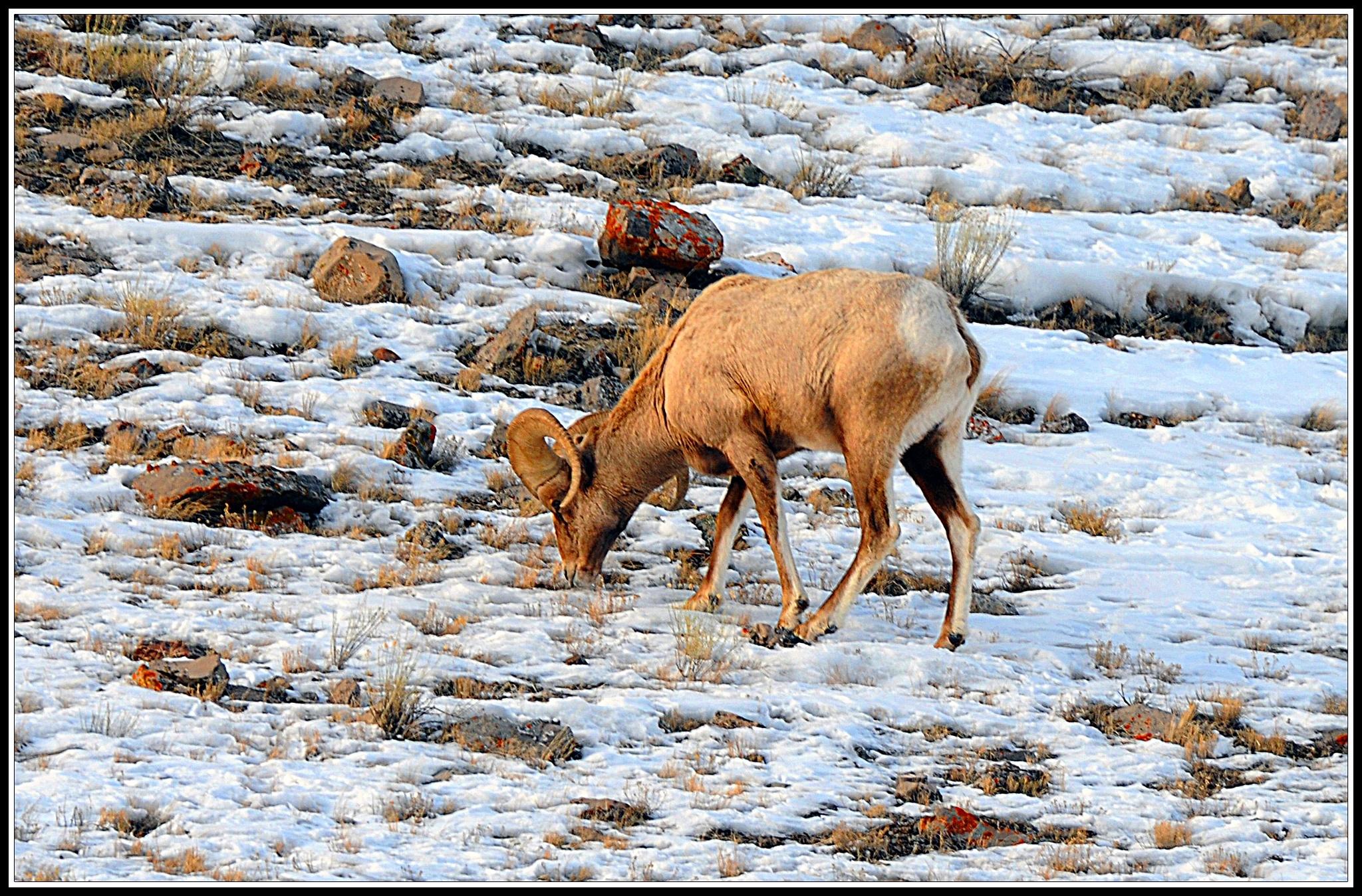 Jacksonhole Wyoming by Nelson Sibulo