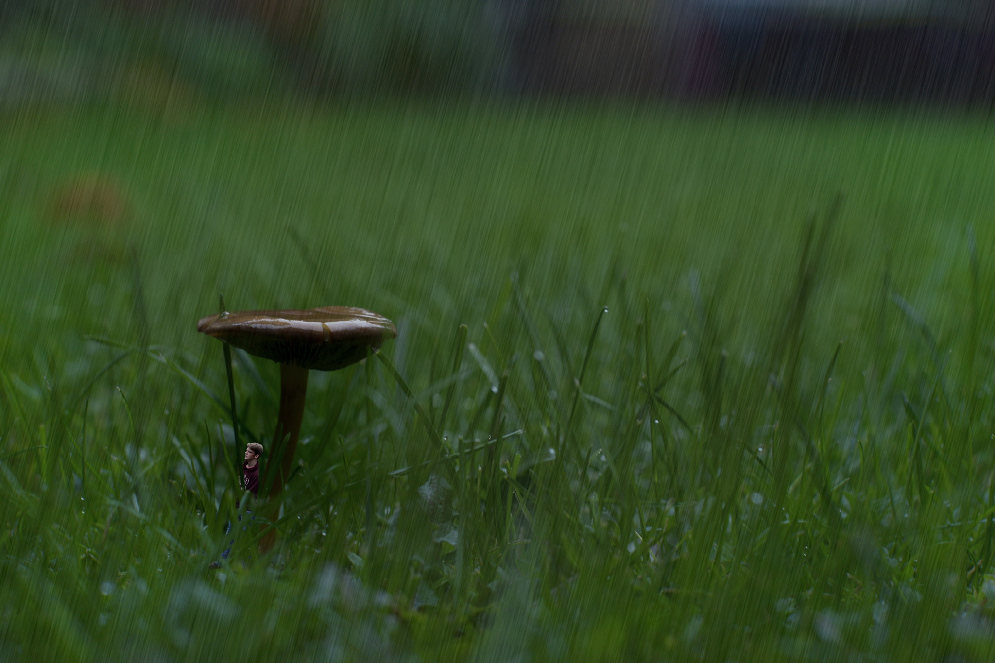 Rain mushroom by LouisBlawert