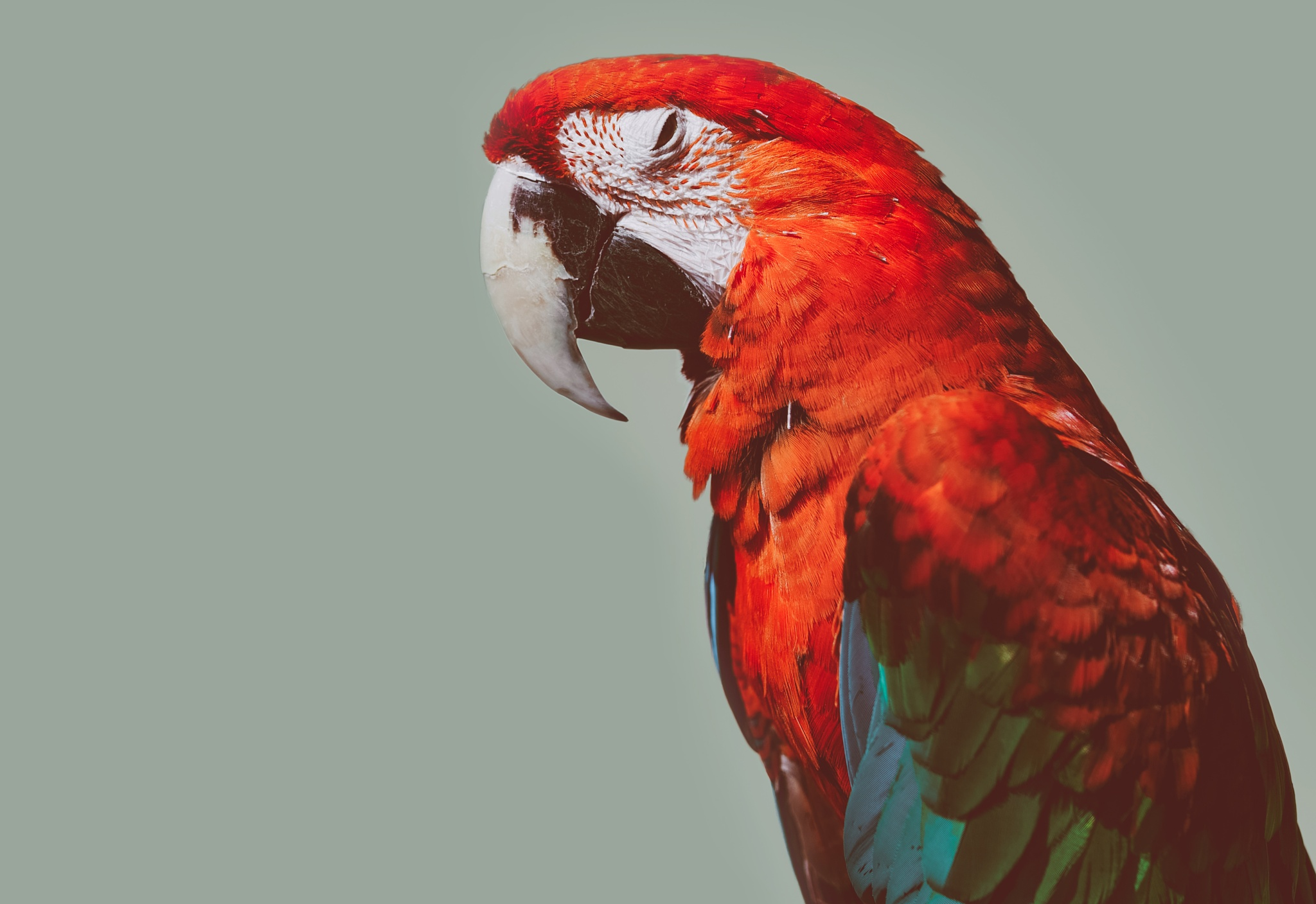 Macaw by Quintin Gellar