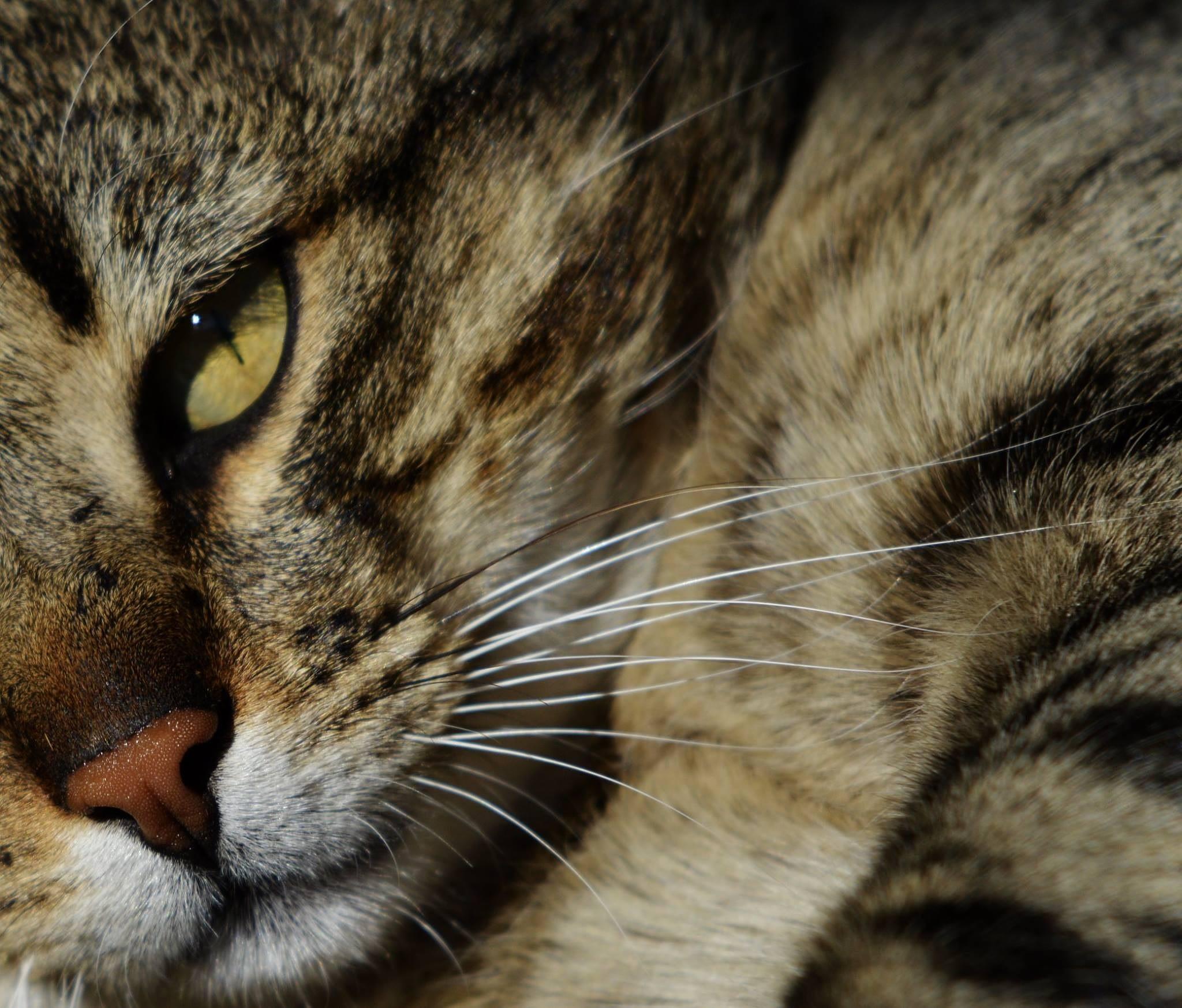 Litlle Tiger by Cristina Lavrador