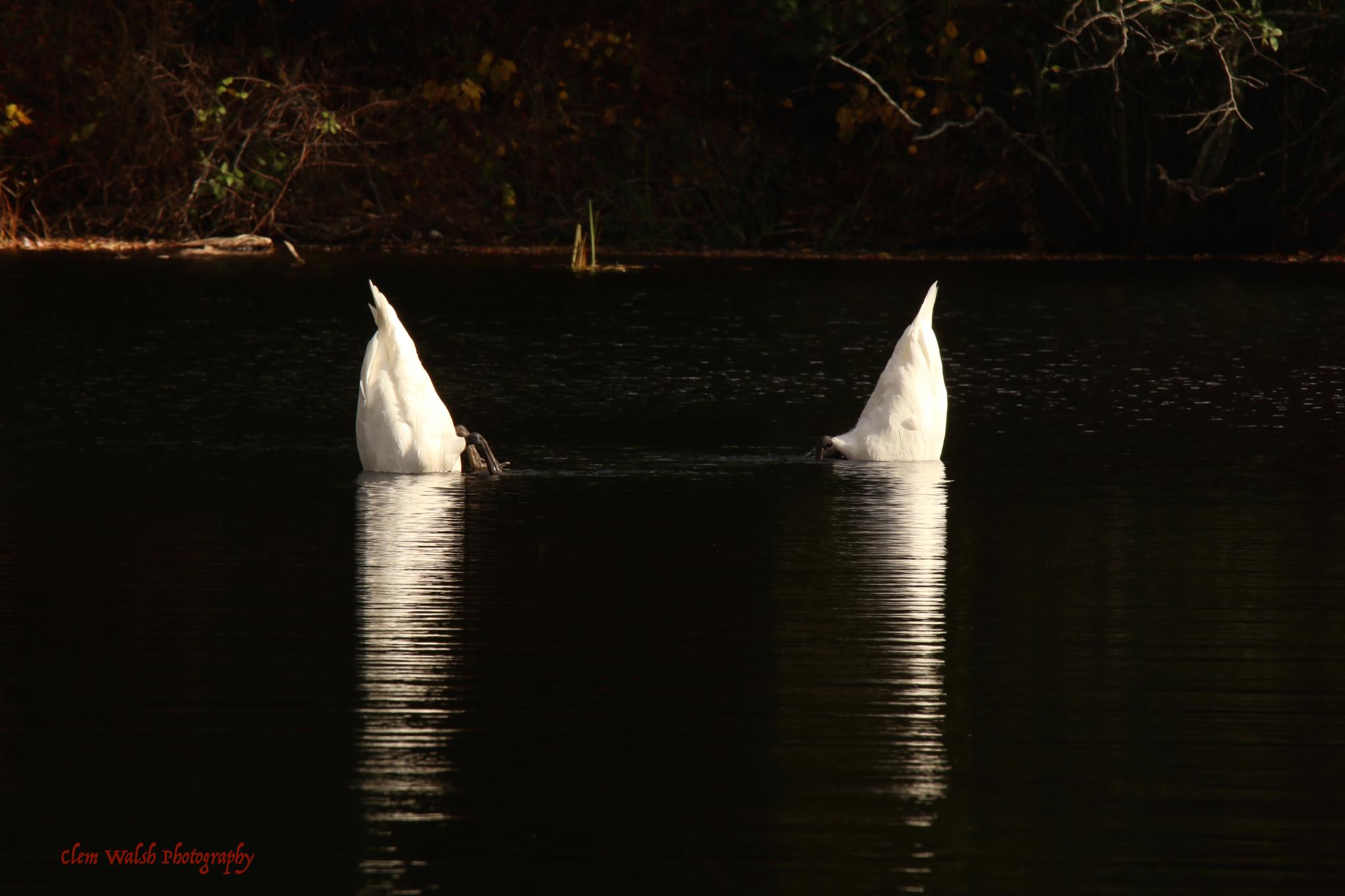 Synchronized Swimming by Clem Walsh Photography