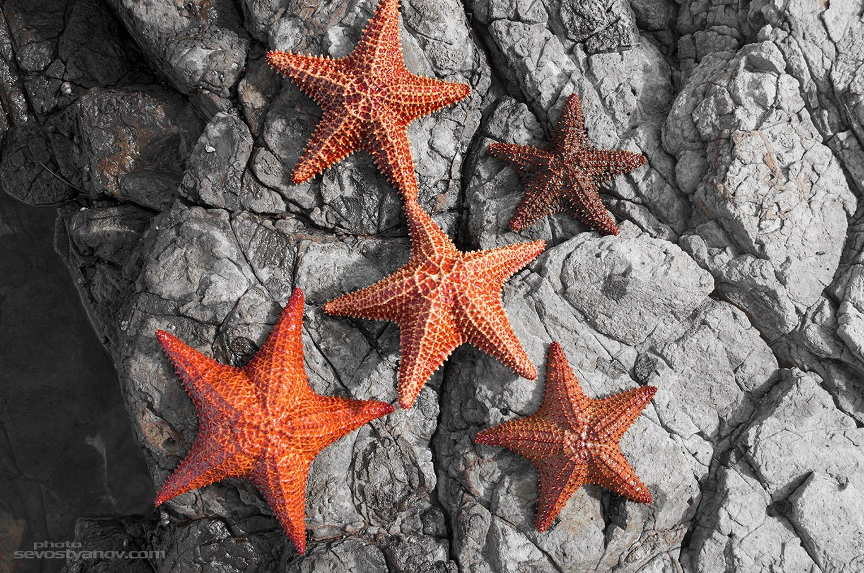 Starfishes by cinema4design