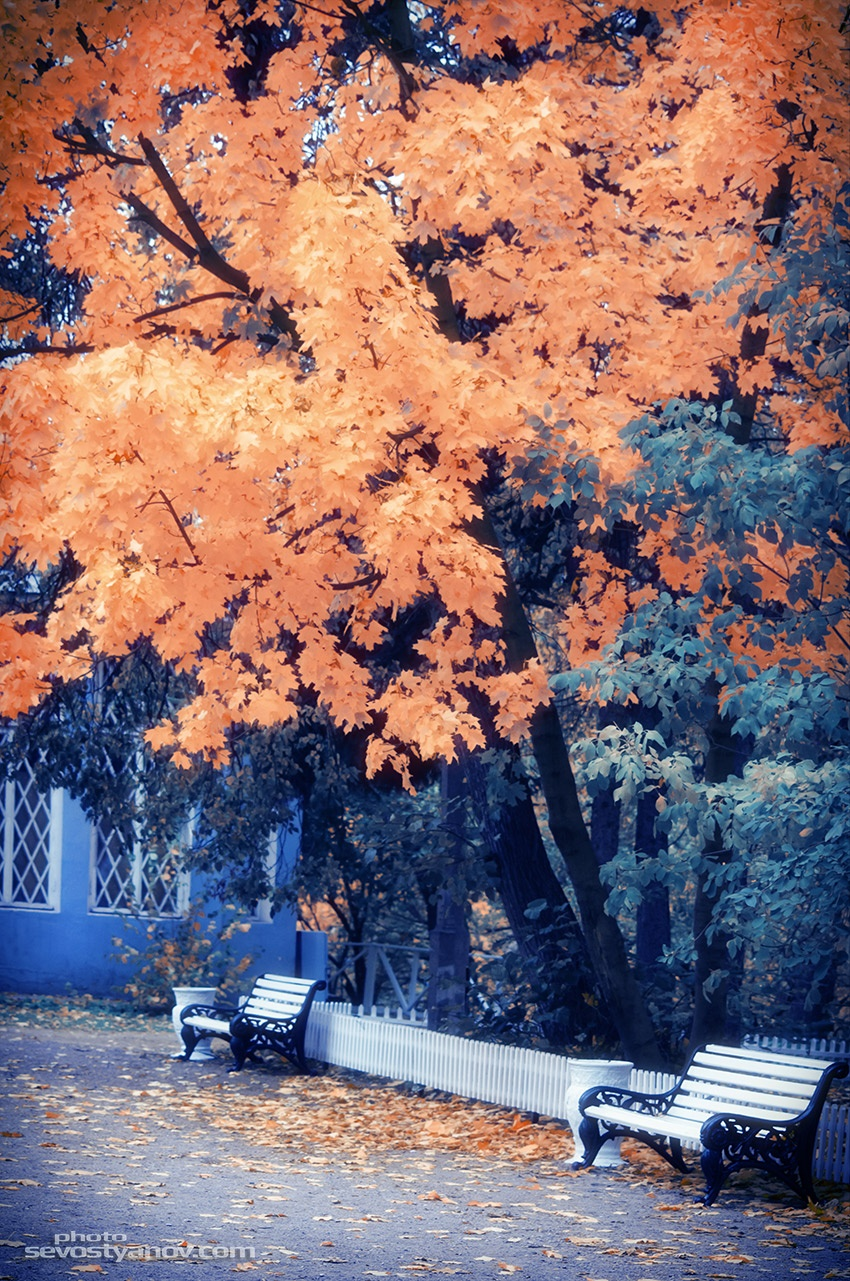 Autumn Park by cinema4design