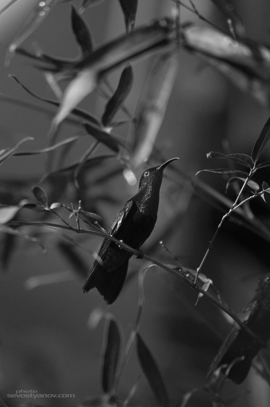 Colibri by cinema4design