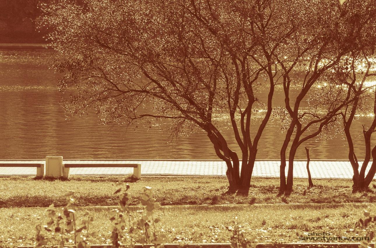 Autumn In City Park by cinema4design