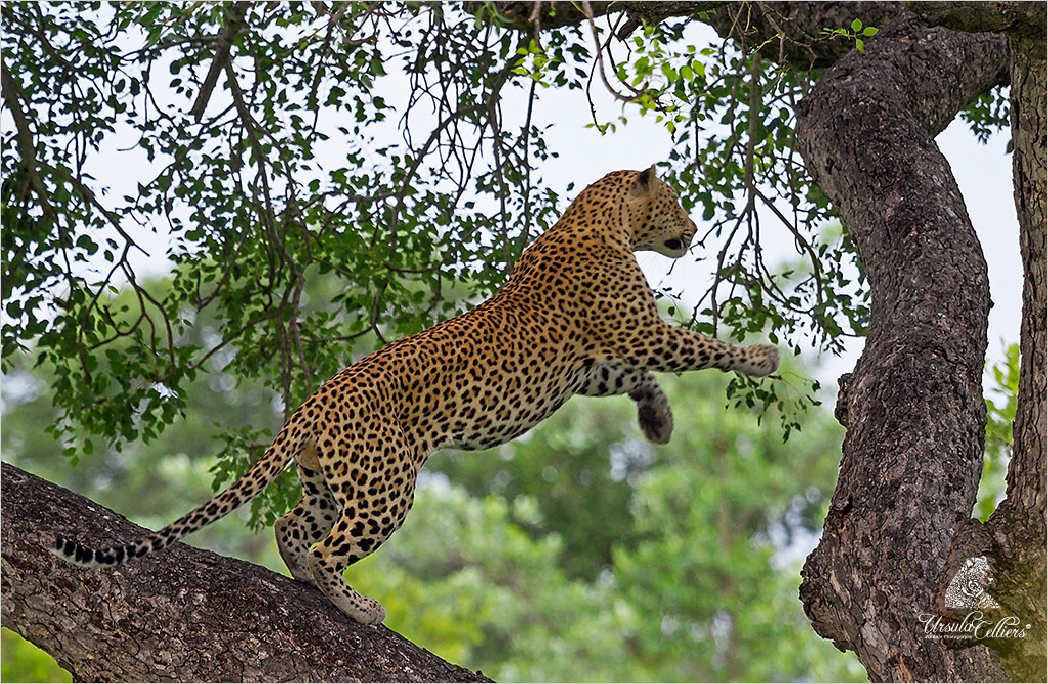 The jump by Ursula Celliers - Wildlife Photography