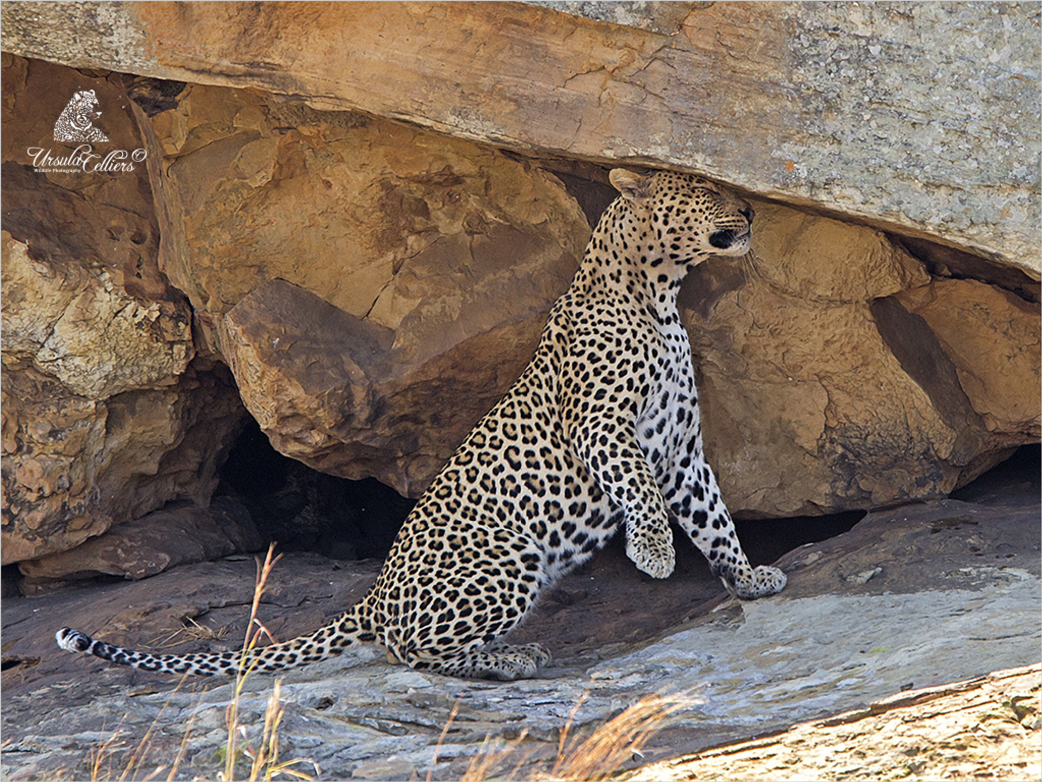 Marking by Ursula Celliers - Wildlife Photography