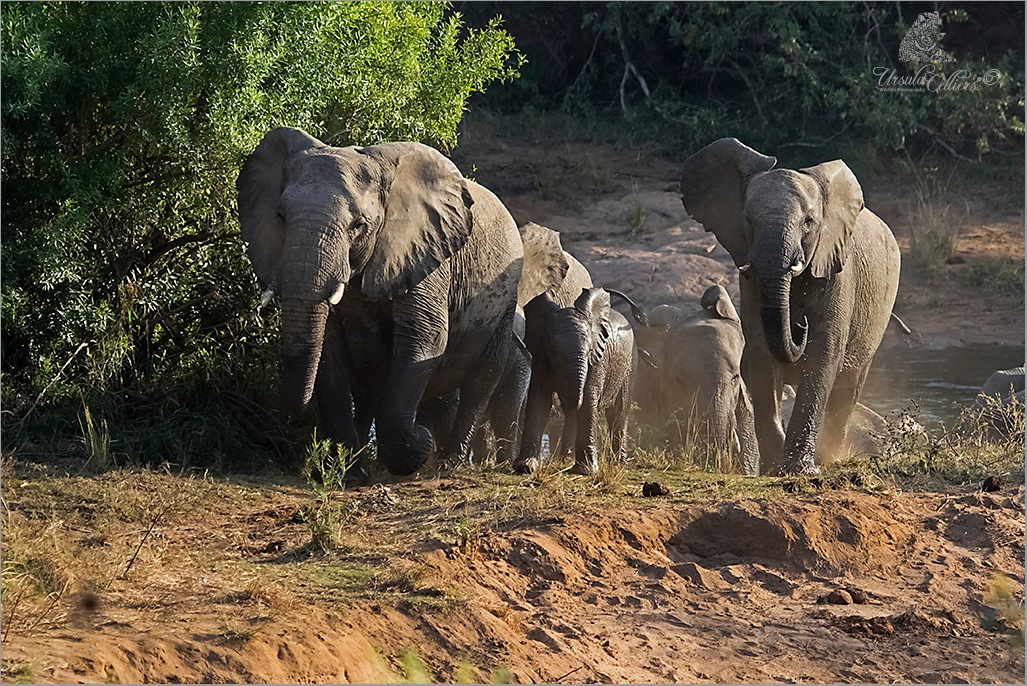 Lets go by Ursula Celliers - Wildlife Photography