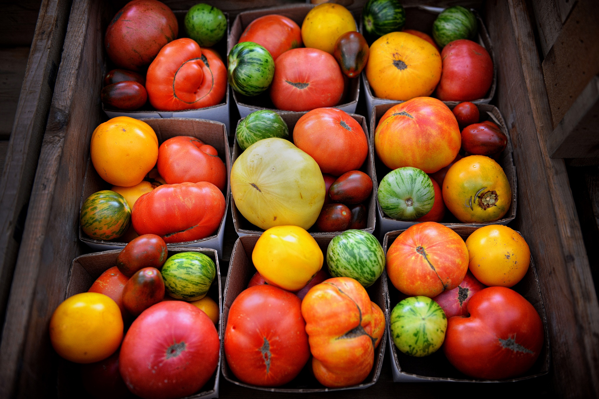 Tomatoes by Fotoguy