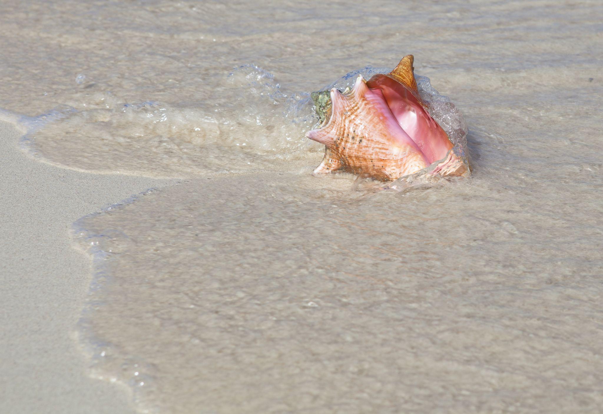 Sea shell by Yuliya Christensen