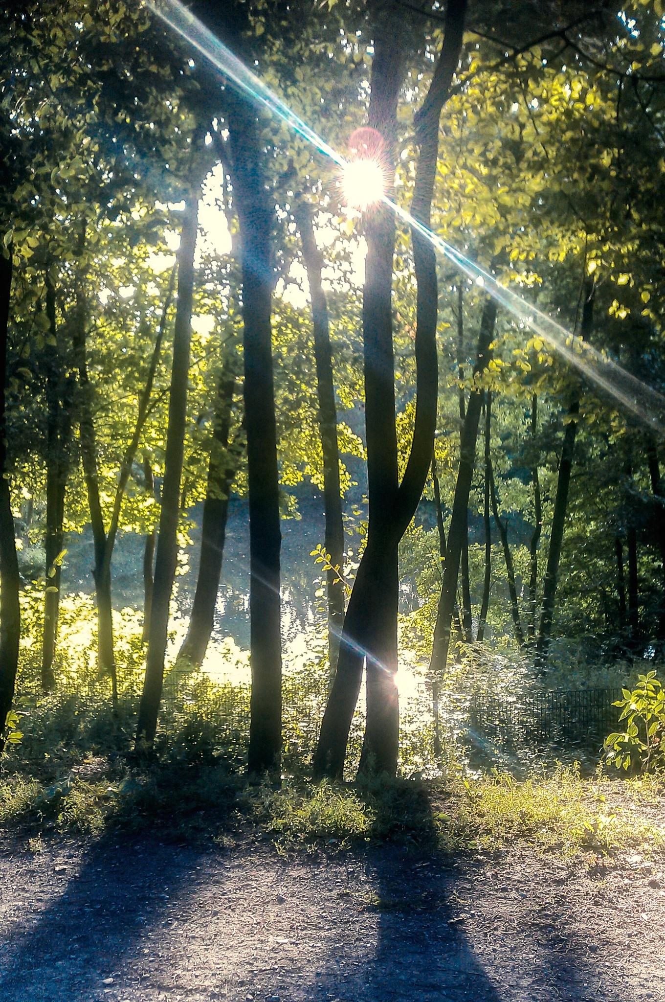 SunBeam by FoTorsten