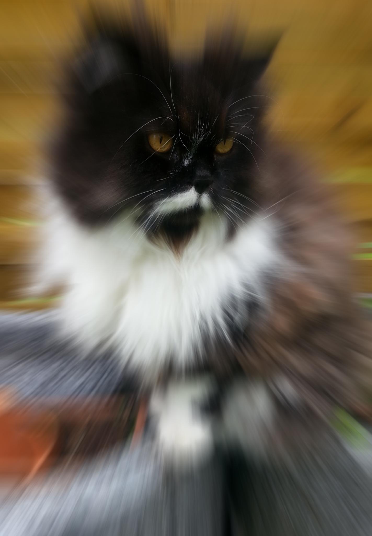 High Speed Cat by FoTorsten