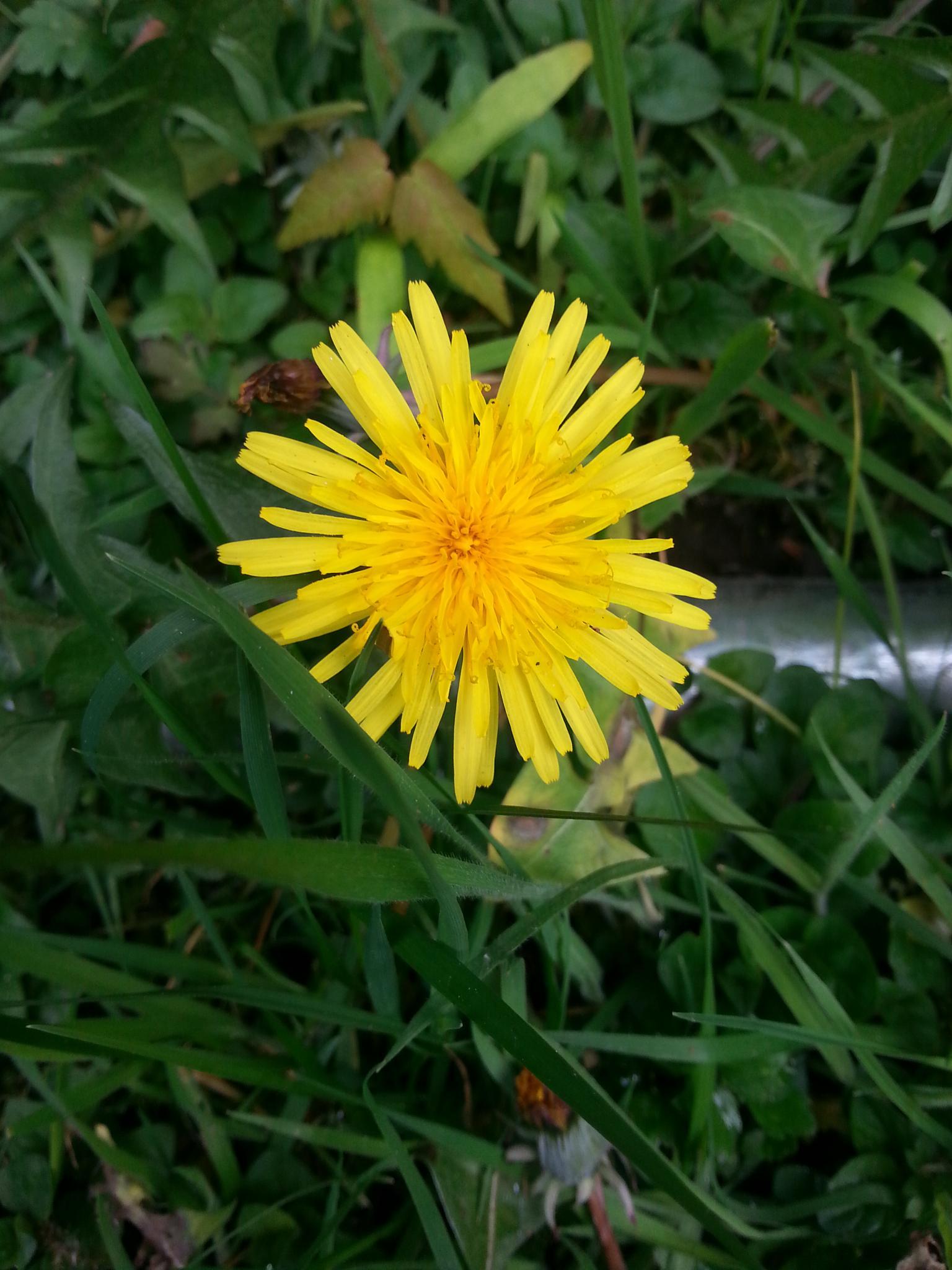 Yellow by FoTorsten