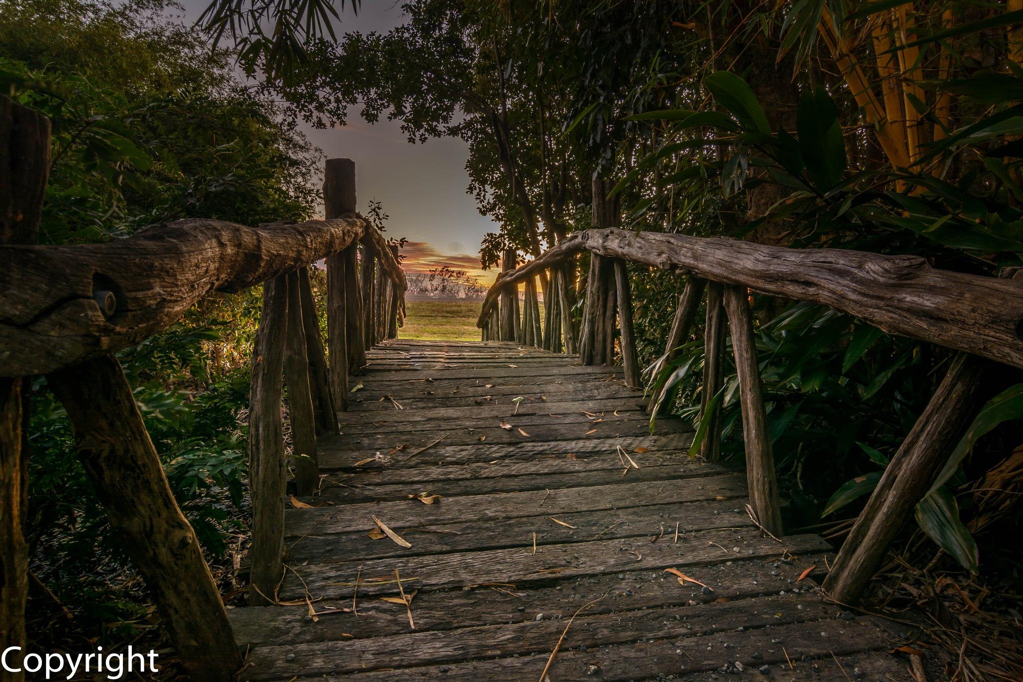 Bridge by Glen Ross