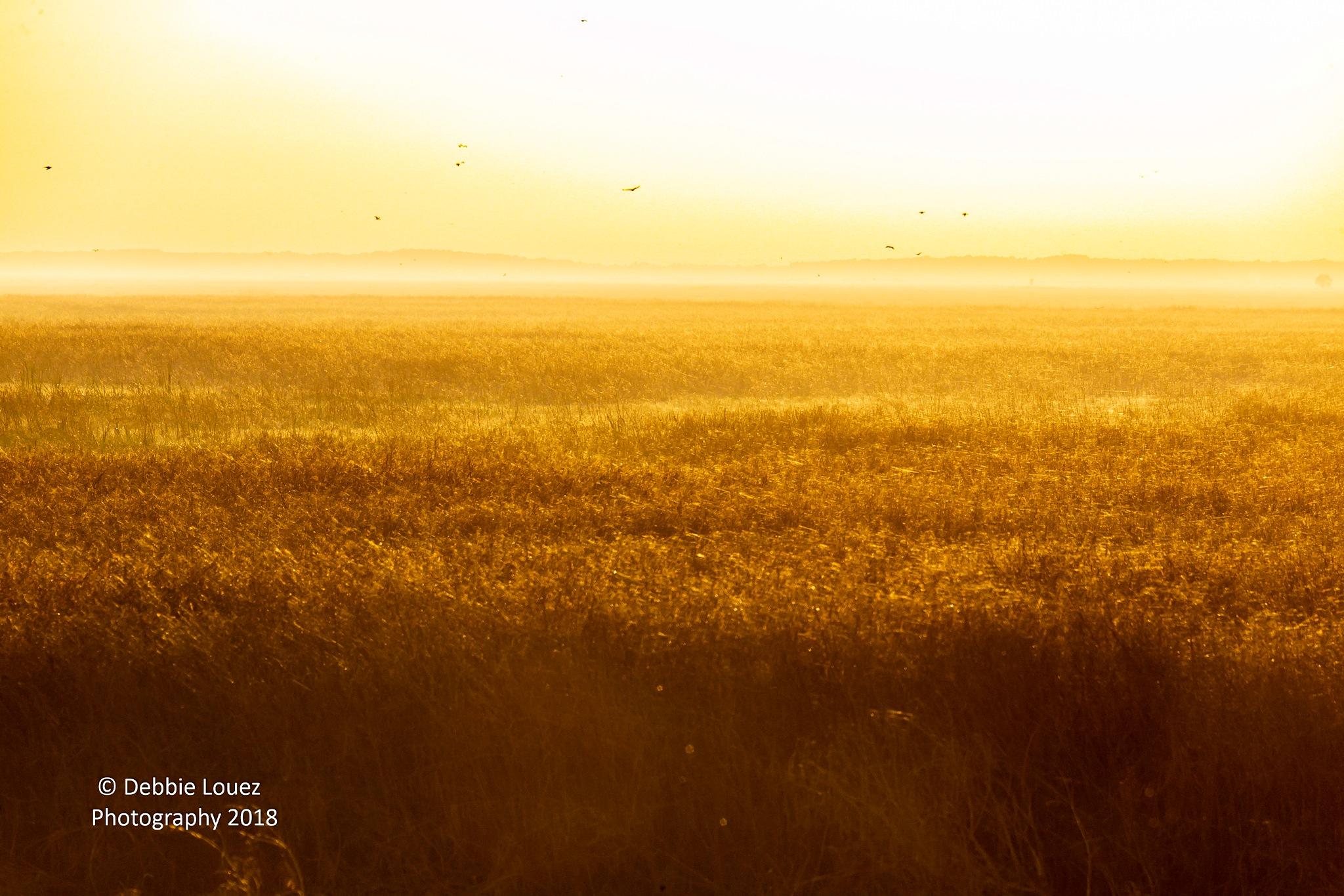 Golden Hour  by Debbie Louez