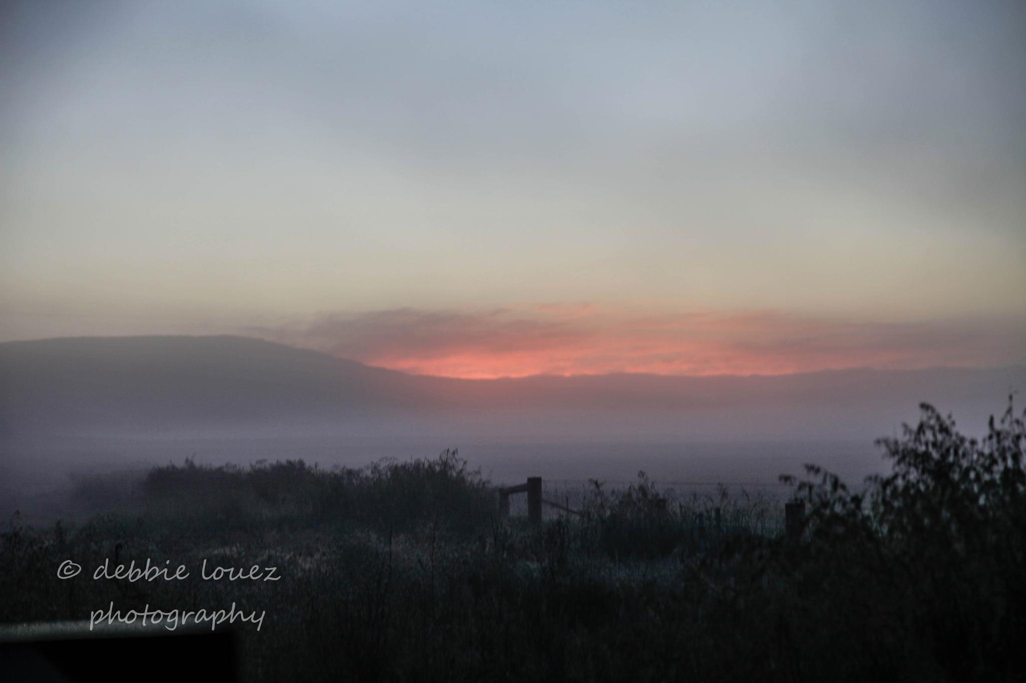 Fog  by Debbie Louez