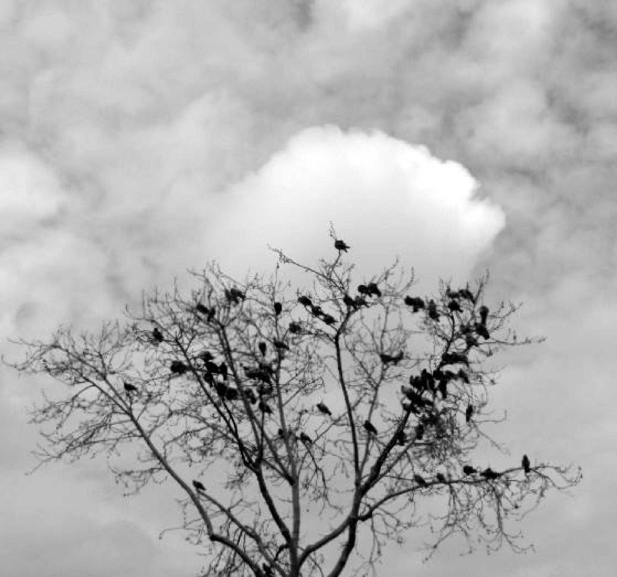 Kuş ağacı! by Demet Alper