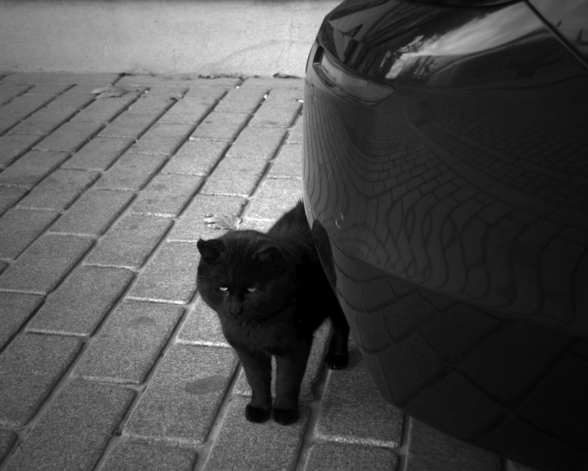 Black Cat! by Demet Alper