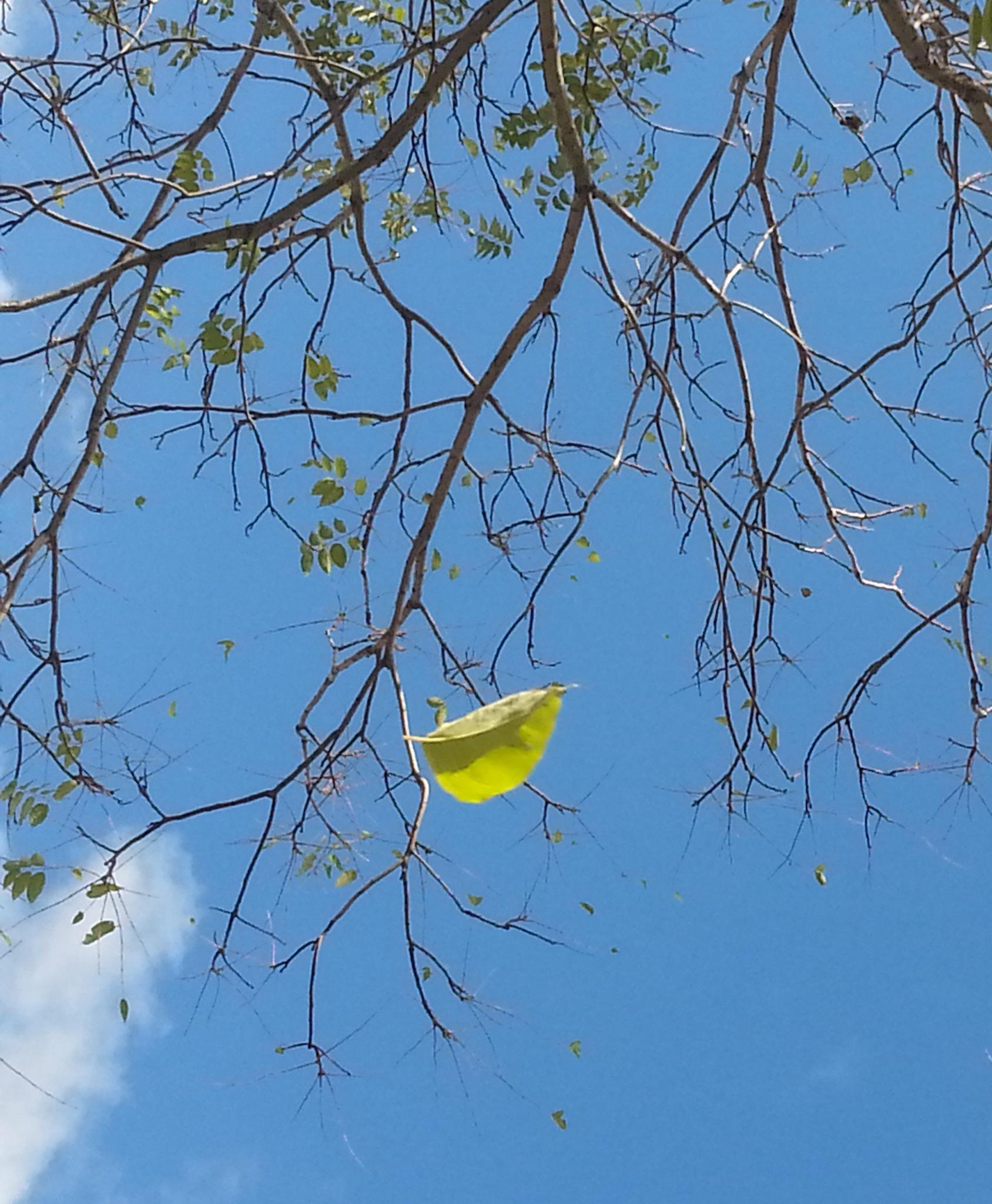 ''Rüzgarla düşen yapraklar'' by Demet Alper