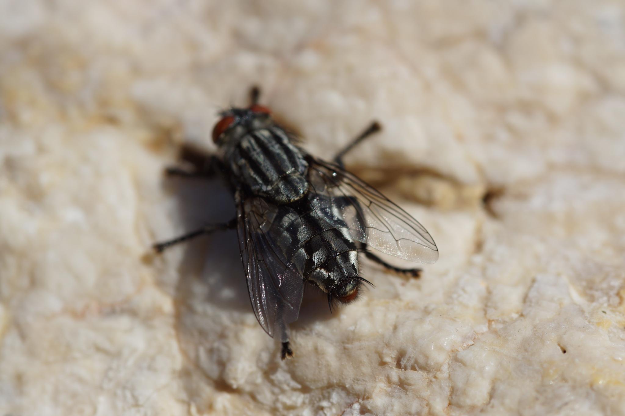 A Flies Rear End by steve_whitmarsh