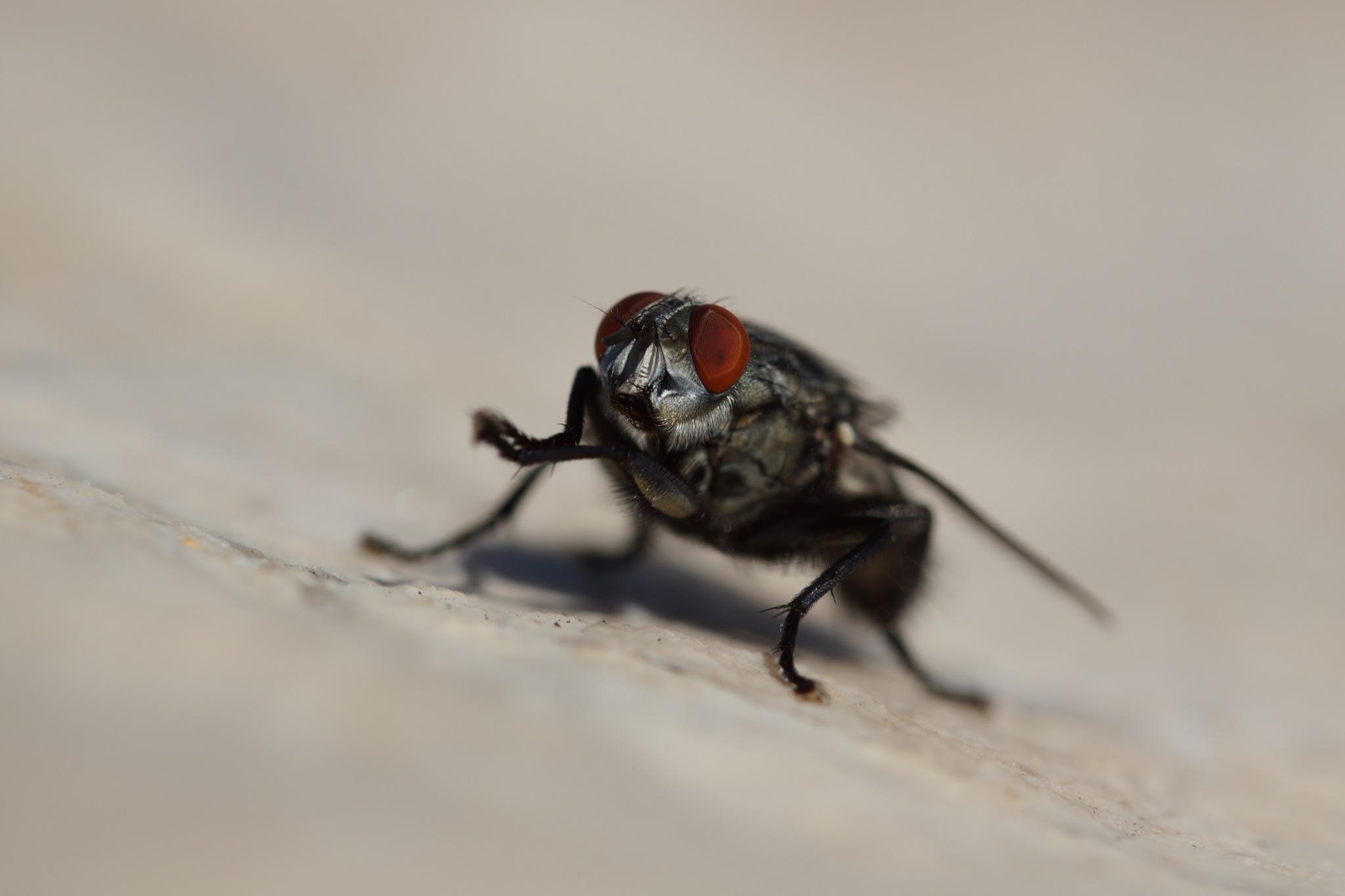 Flies Eyes by steve_whitmarsh