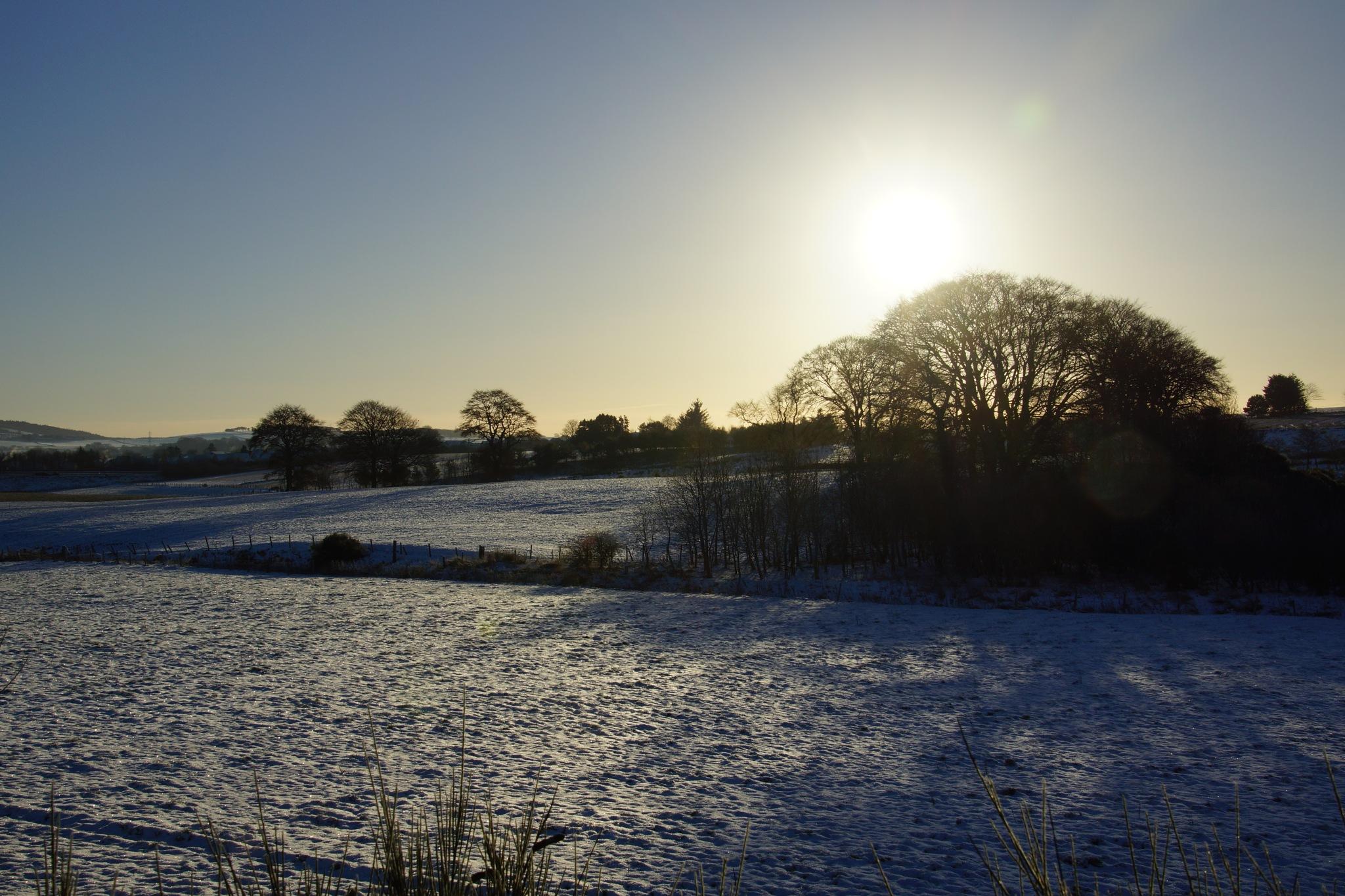Cold Winter Sun by steve_whitmarsh