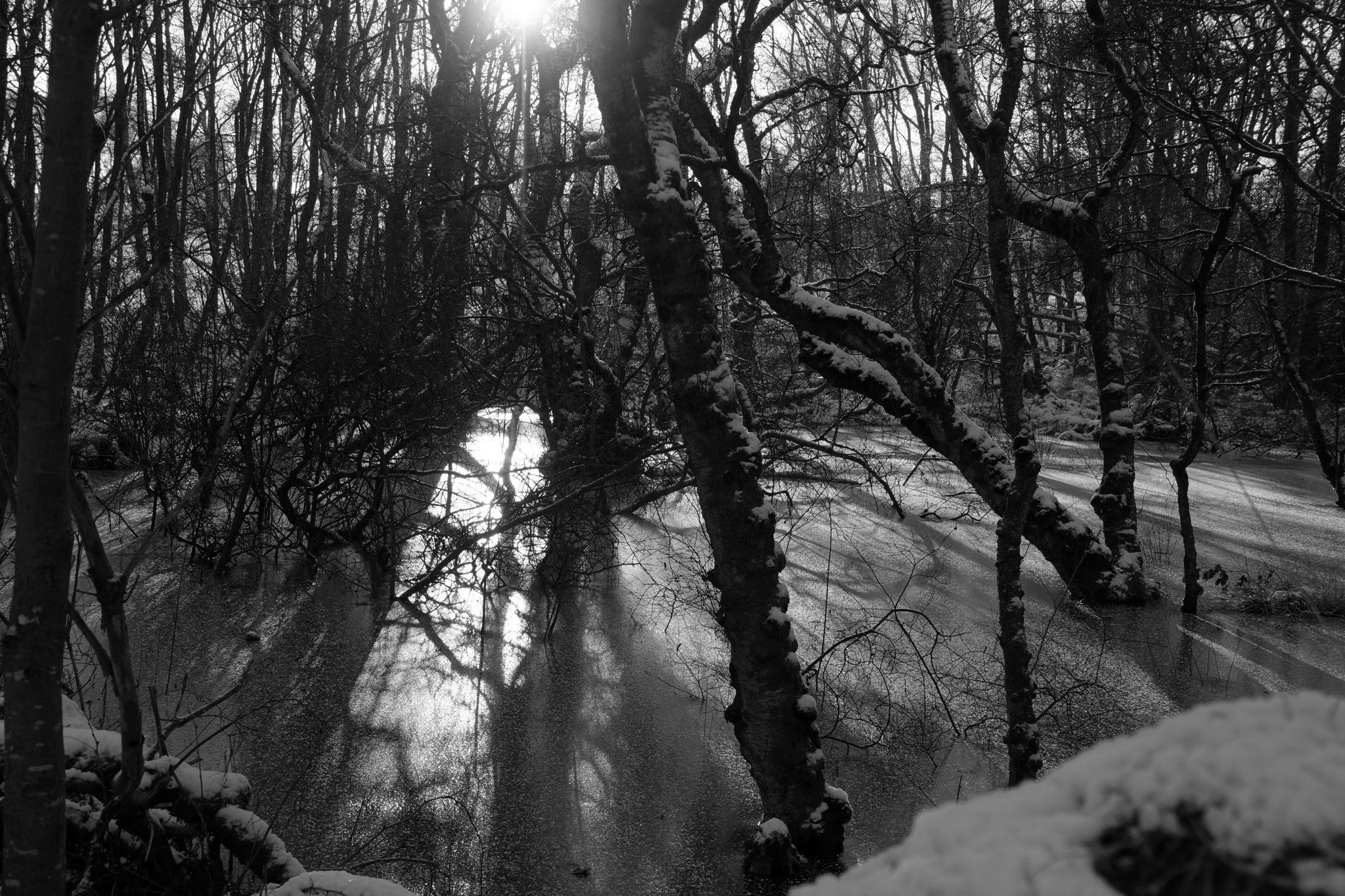 Frozen in Time by steve_whitmarsh
