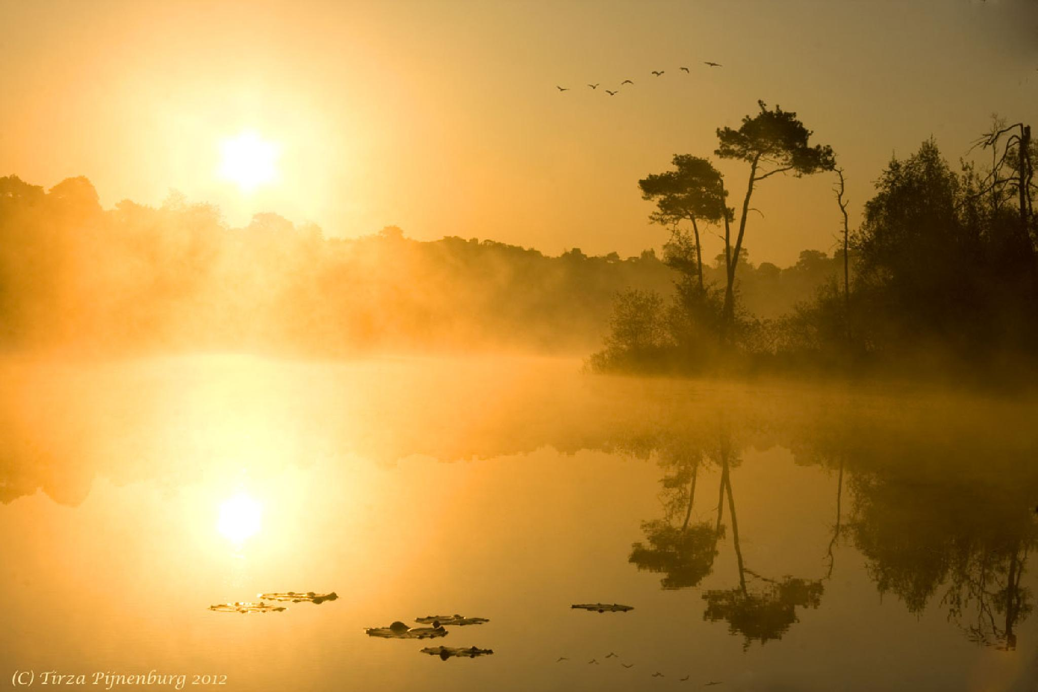 Photo in Landscape #sunrise #fog #yellow #reflection #nature #landscape #water #trees #sunlight #morning #youpicfb