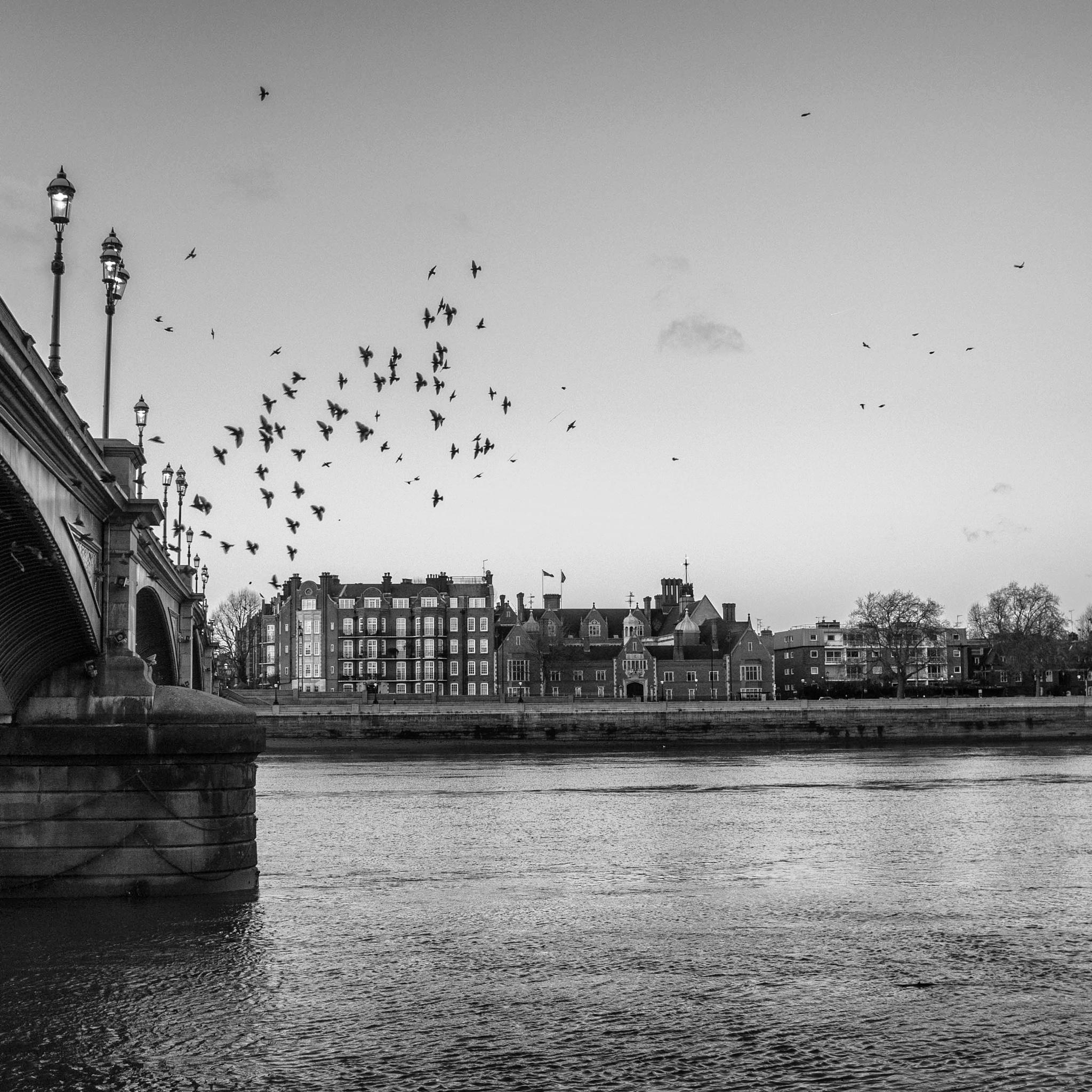 birds  by Jux Curtis