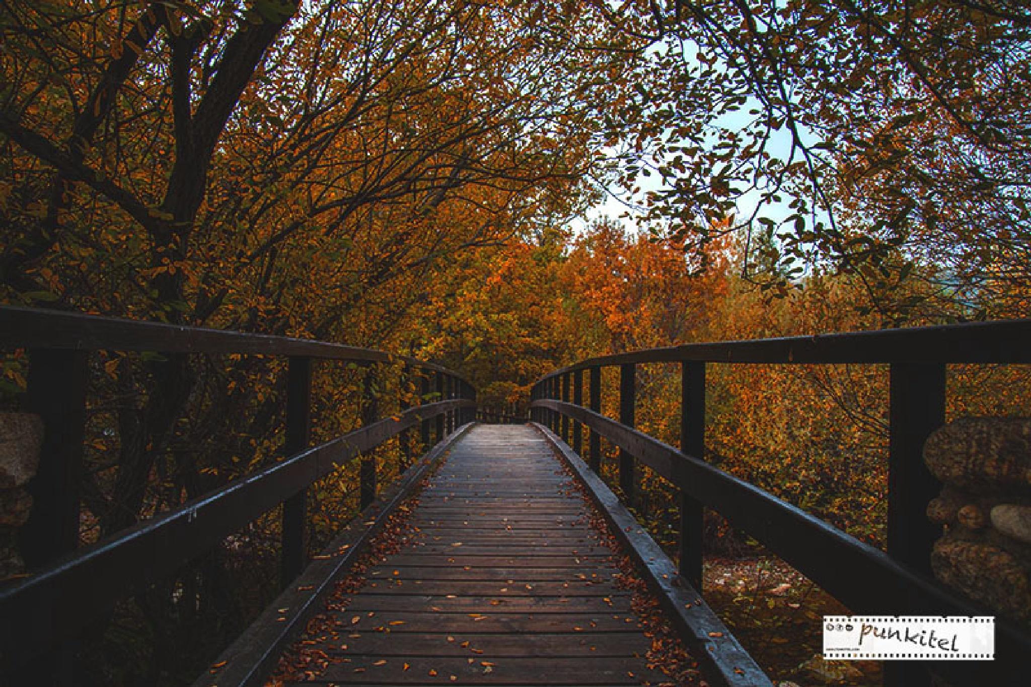 Autumn by punkitel