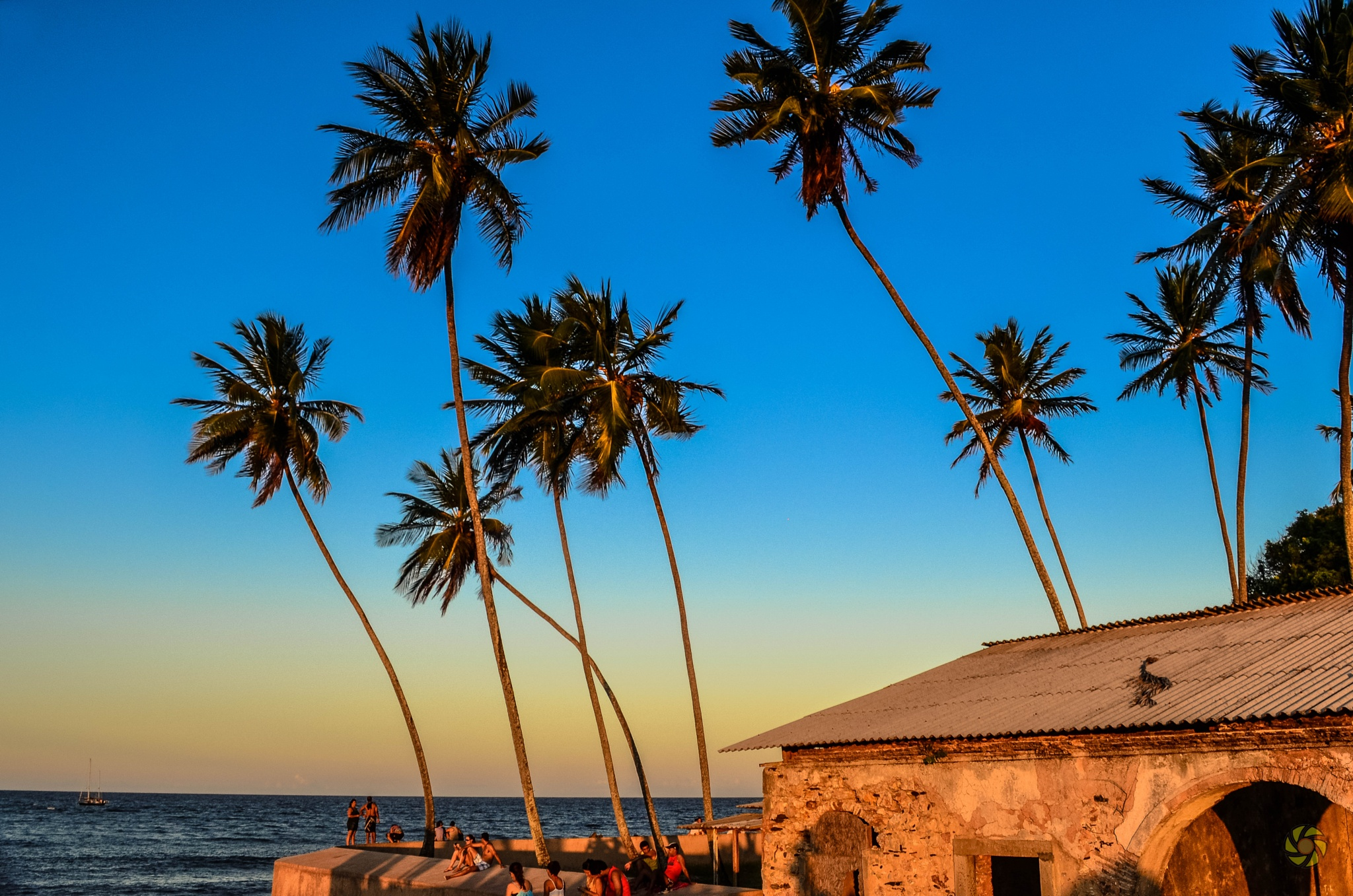 Coconut Trees by Weigler Godoy