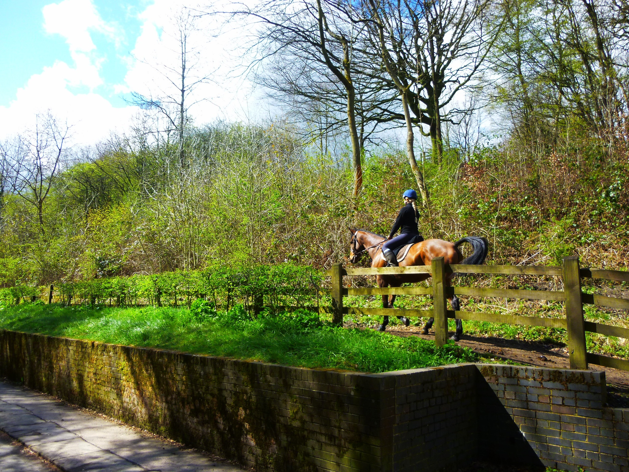 Photo in Animal #woodlands #horse #forest #riding