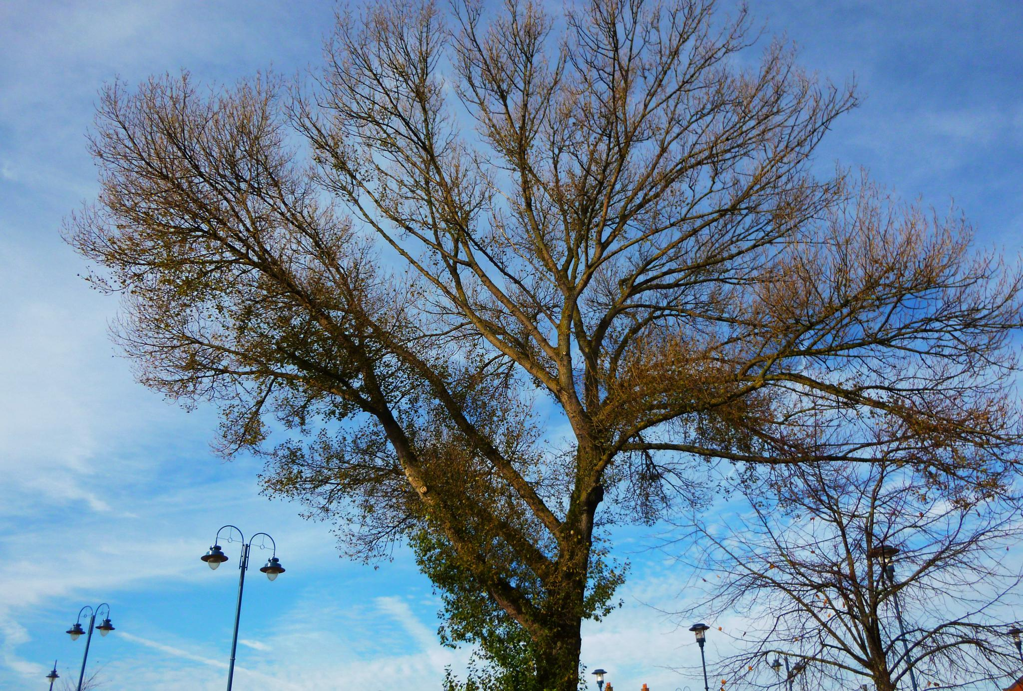 Photo in Nature #trees #nature #old trees in towns #zrnho photos