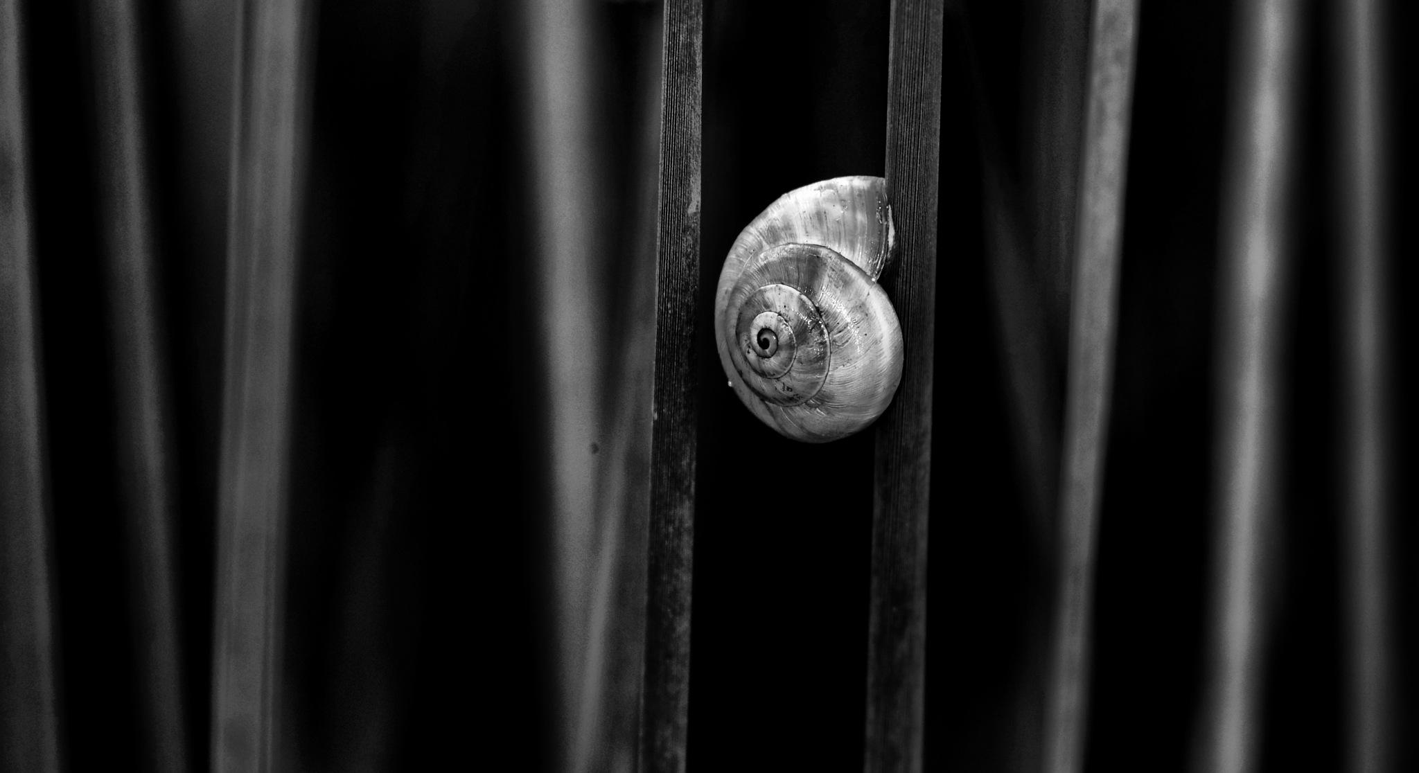 alone by AbdelAzim Altaghloby