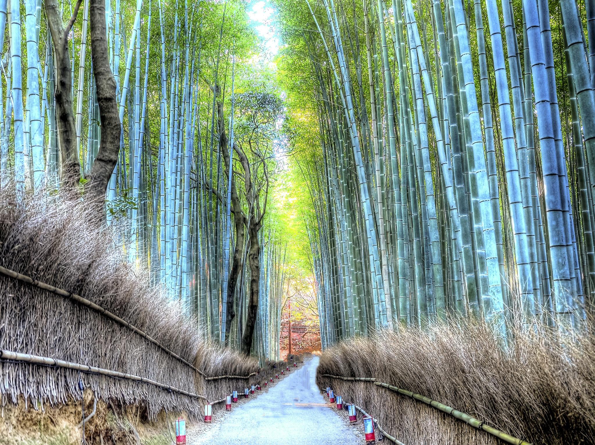 bamboo Forest by hironakajima