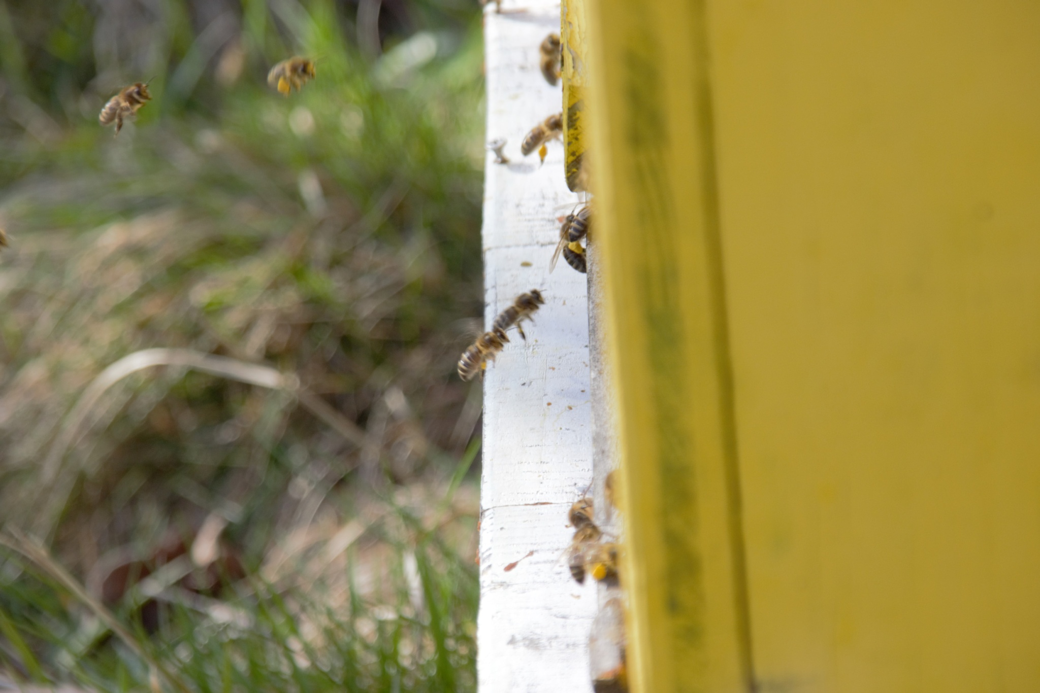 working bees by Marta Skowron