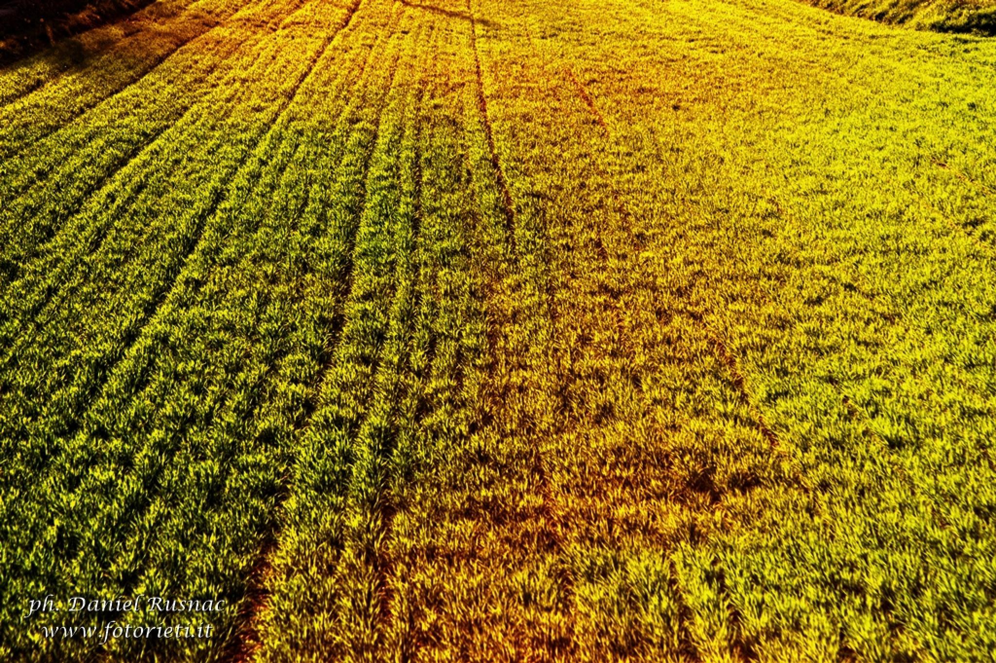 Grass by Daniel Rusnac di Fotorieti