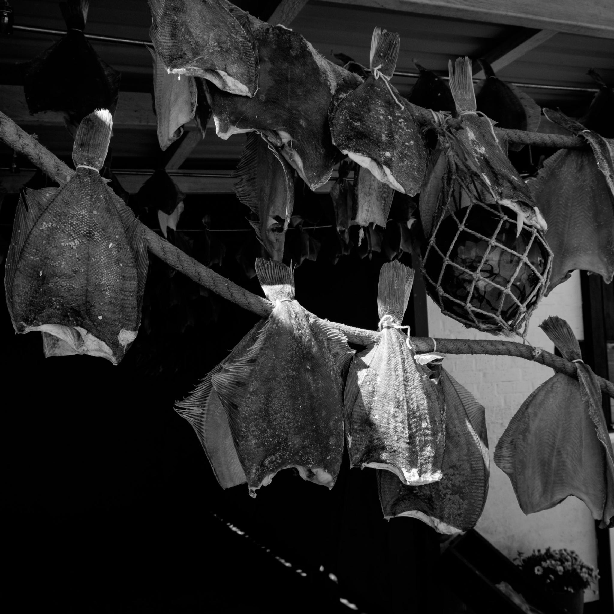 Dried fish by Dorit Bach