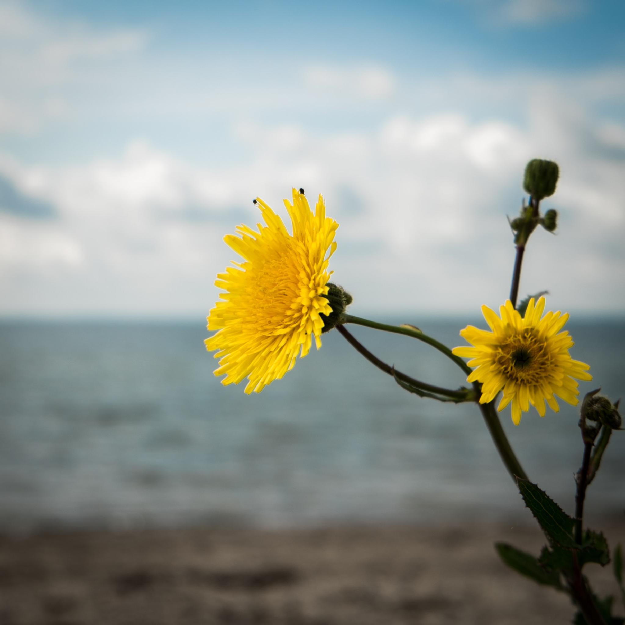 Photo in Nature #yellow #flower #beautiful #denmark
